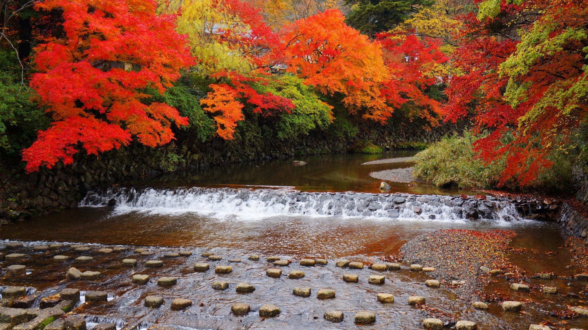 高野川の色とりどりの紅葉