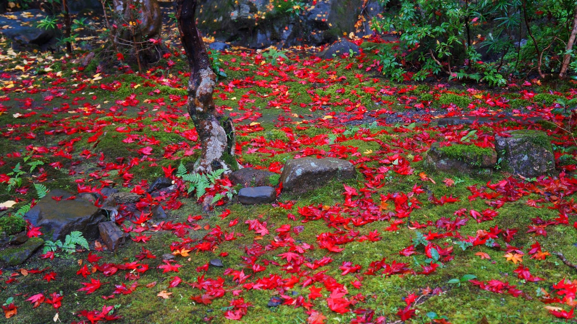 栖賢寺の鮮やかな散り紅葉