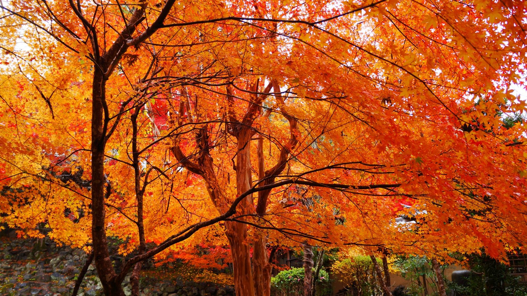 栖賢寺のオレンジ色の紅葉