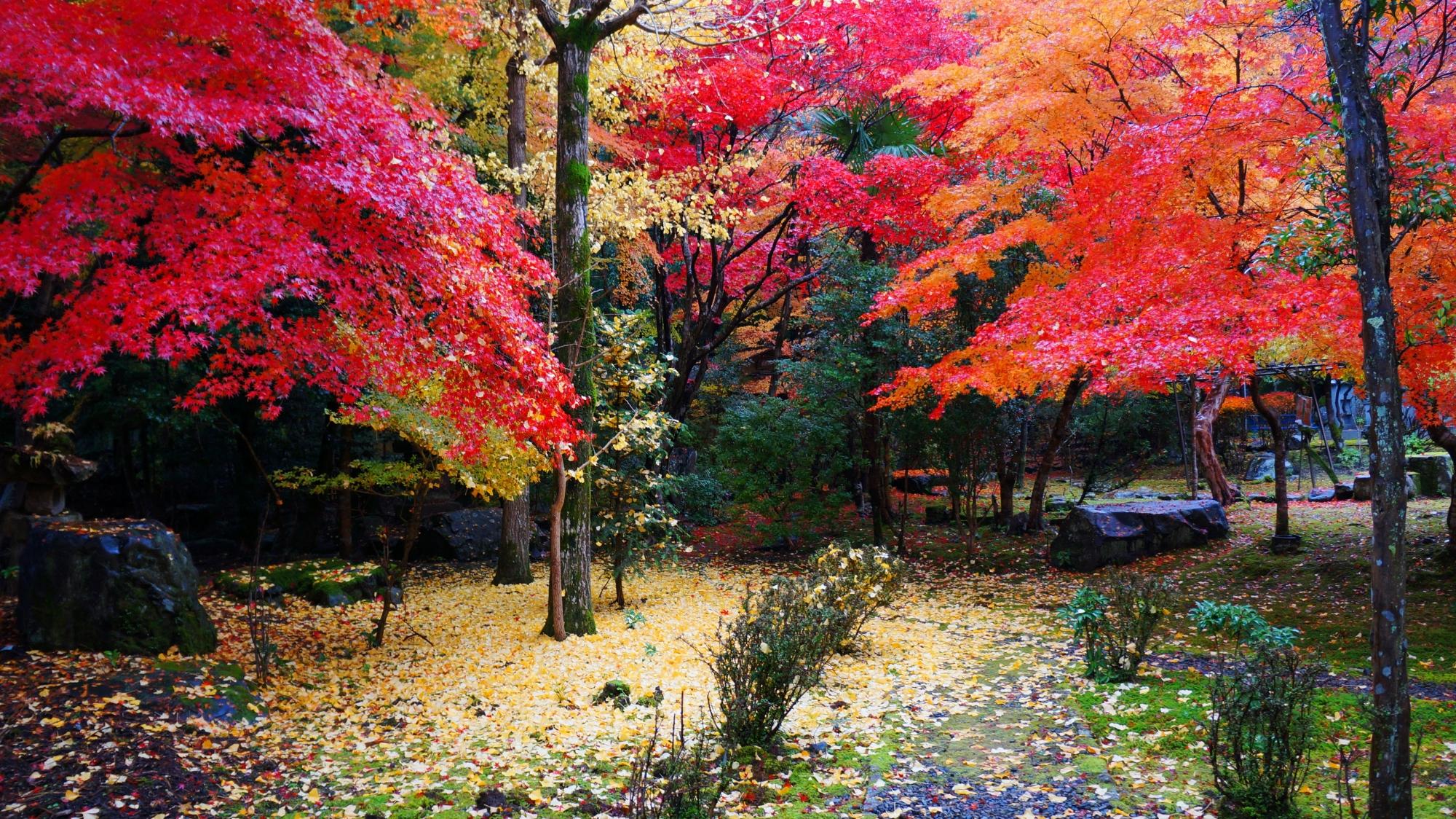 栖賢寺の色とりどりの紅葉と散り銀杏