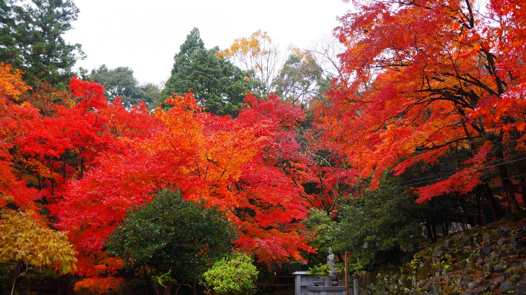 栖賢寺の庭園の見ごろの紅葉