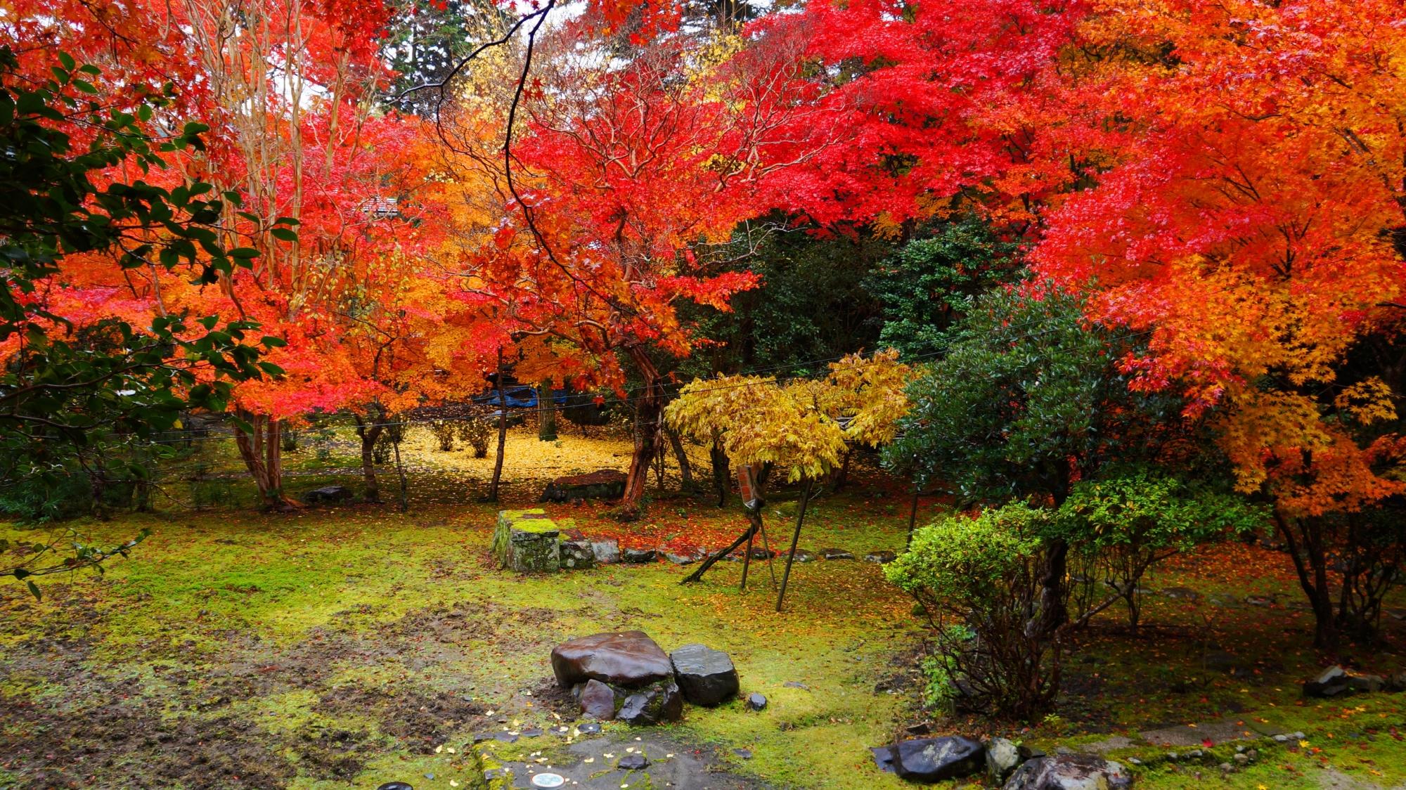 栖賢寺の庭園の鮮やかな紅葉