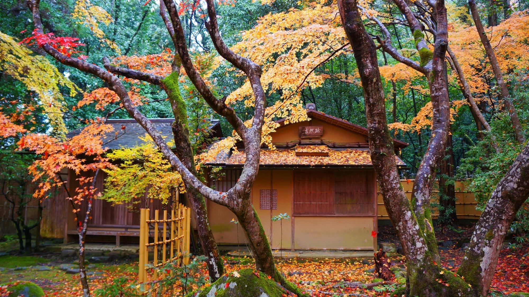 栖賢寺の淡い紅葉につつまれた茶室