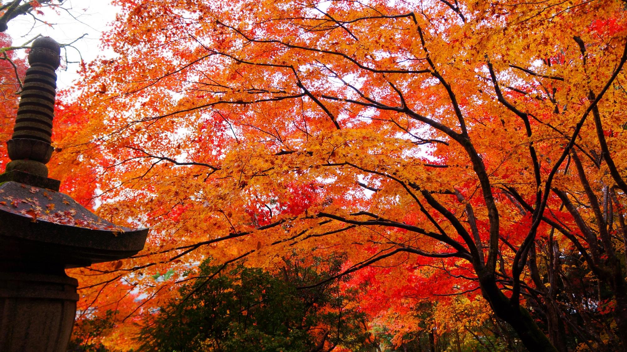 栖賢寺の温かい色合いの紅葉