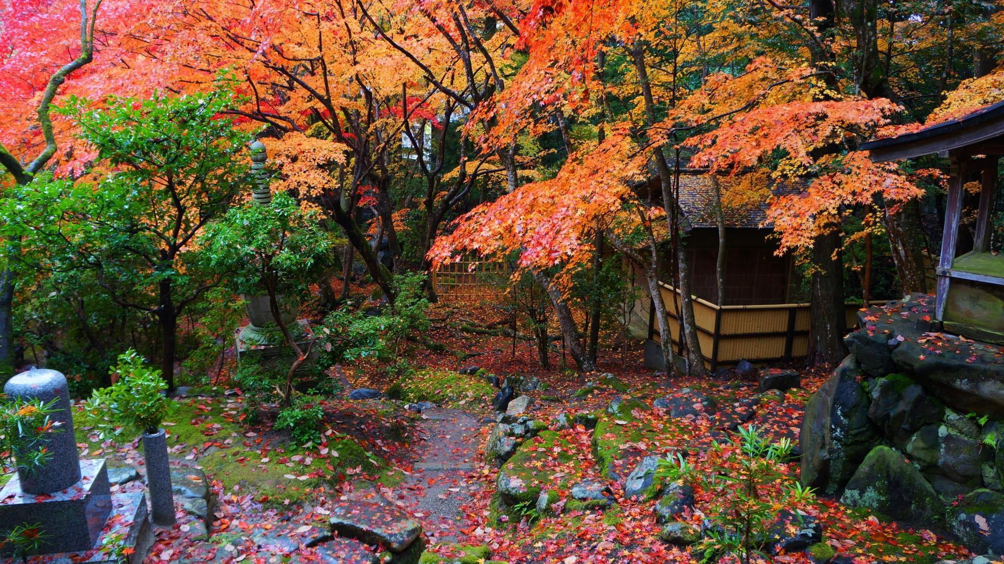 栖賢寺の茶室と多様な紅葉