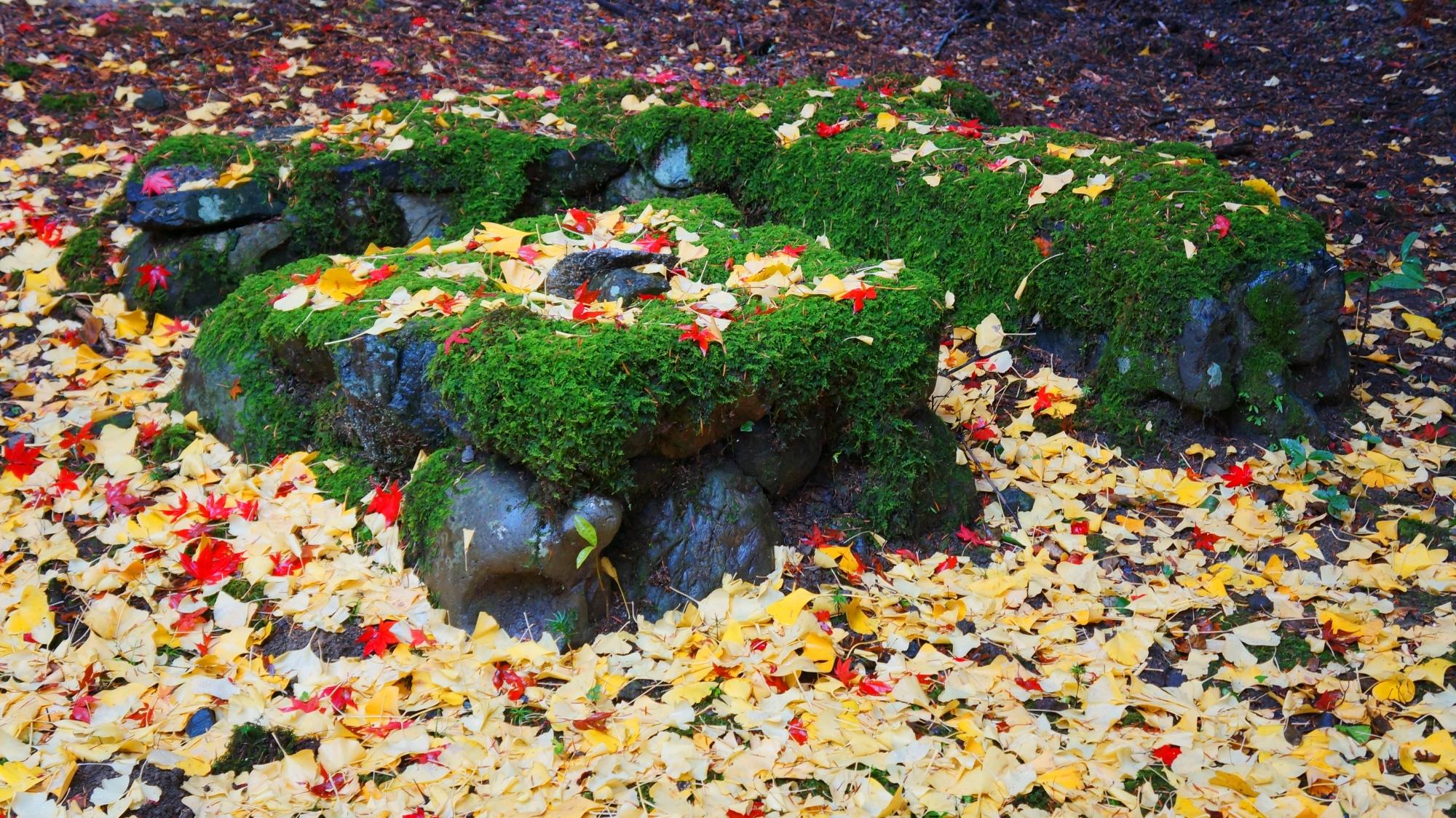 栖賢寺の黄色い散り銀杏