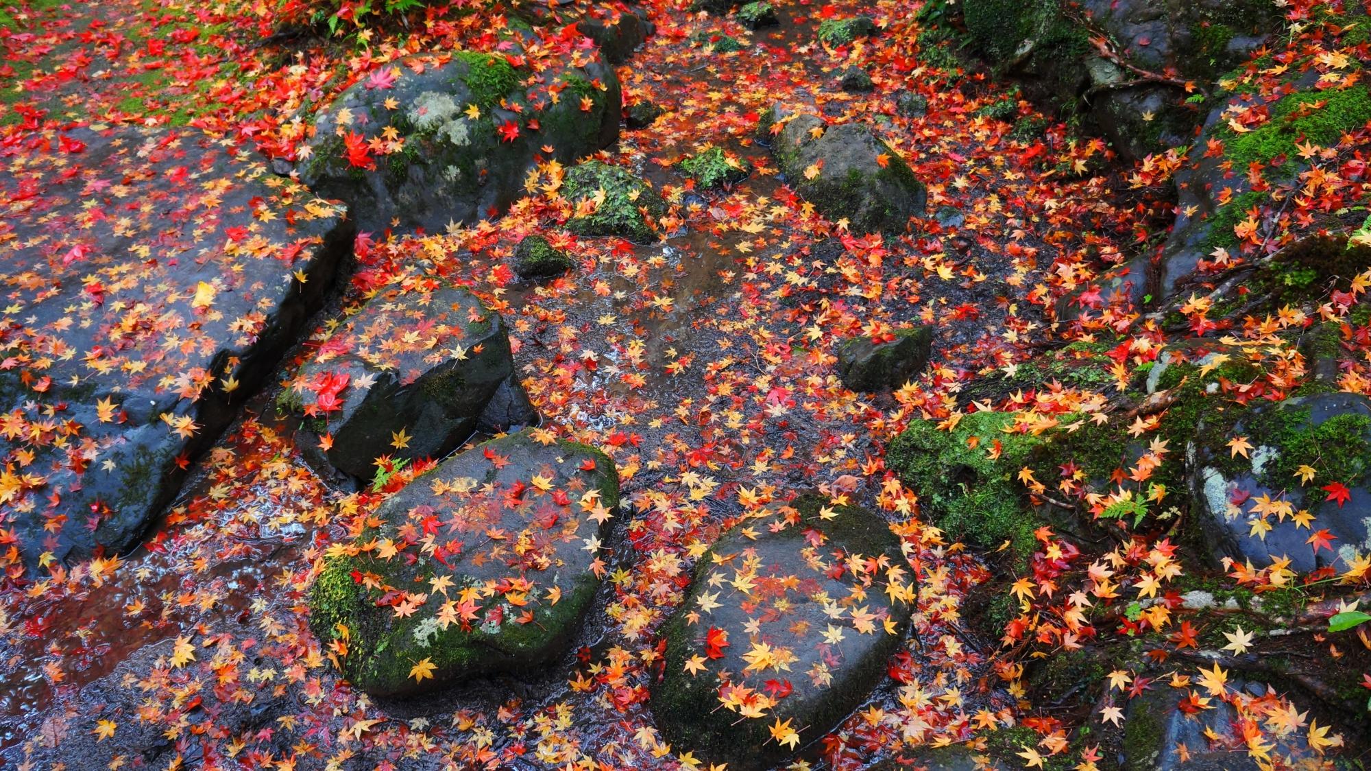 栖賢寺の散り紅葉の絶景