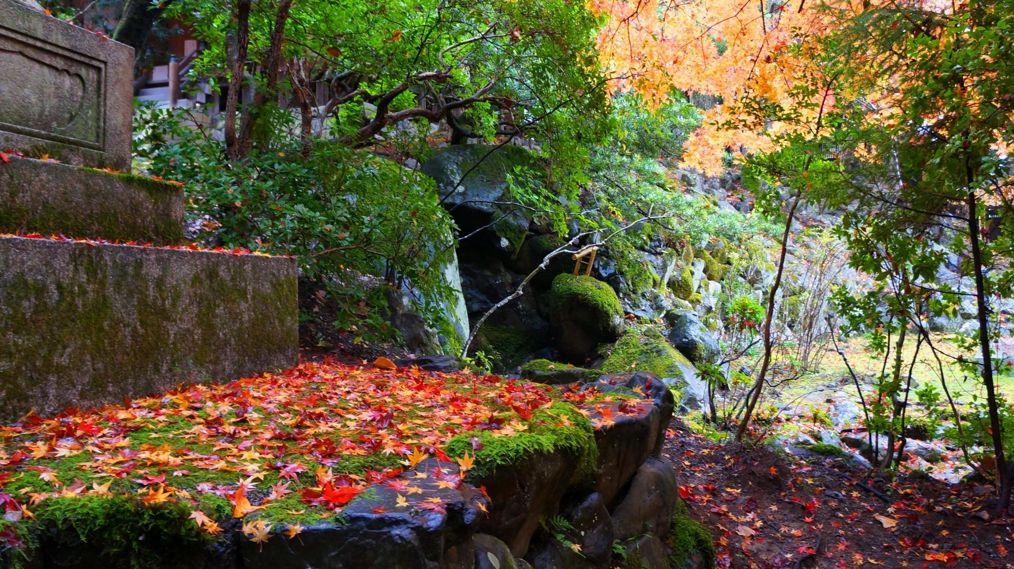 栖賢寺の自然溢れる境内の秋の彩り