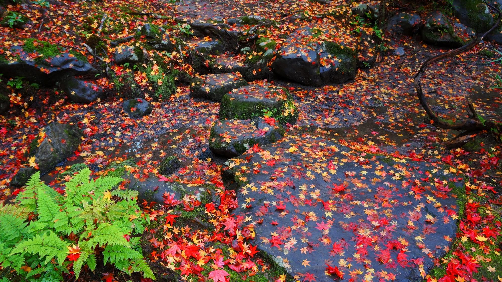 穴場の栖賢寺の岩に散った華やかな紅葉