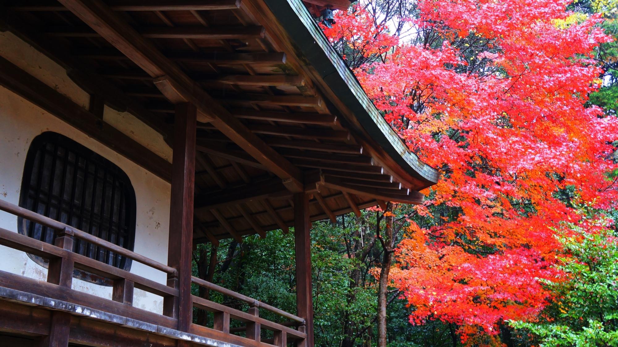 観音堂の白壁に映える赤い紅葉