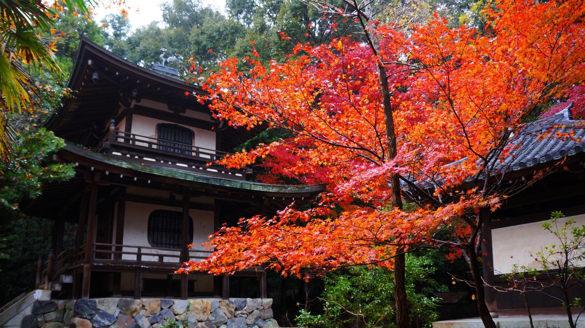 鮮やかな紅葉と京都の隠れた名所