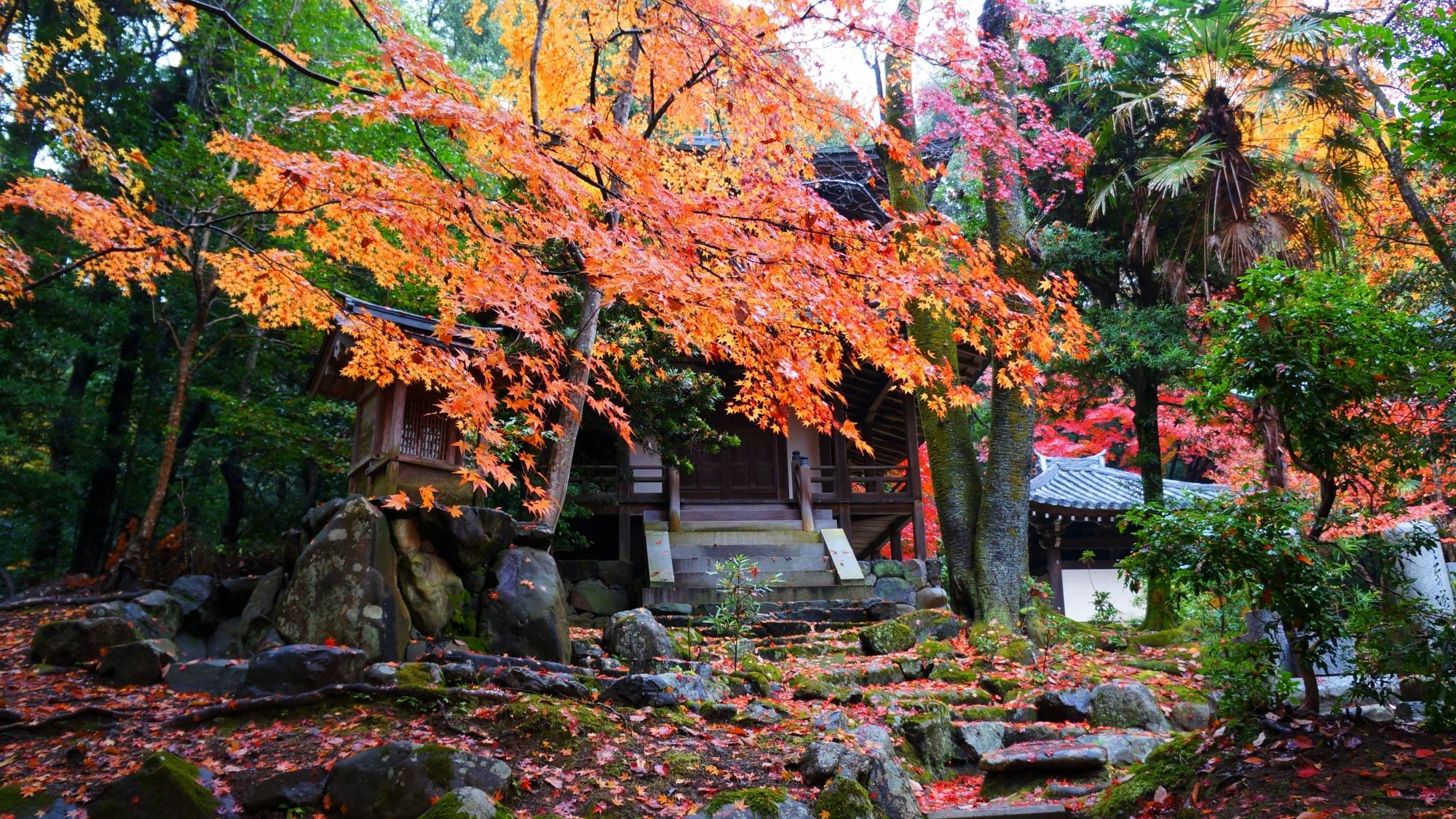 栖賢寺の紅葉につつまれた観音堂