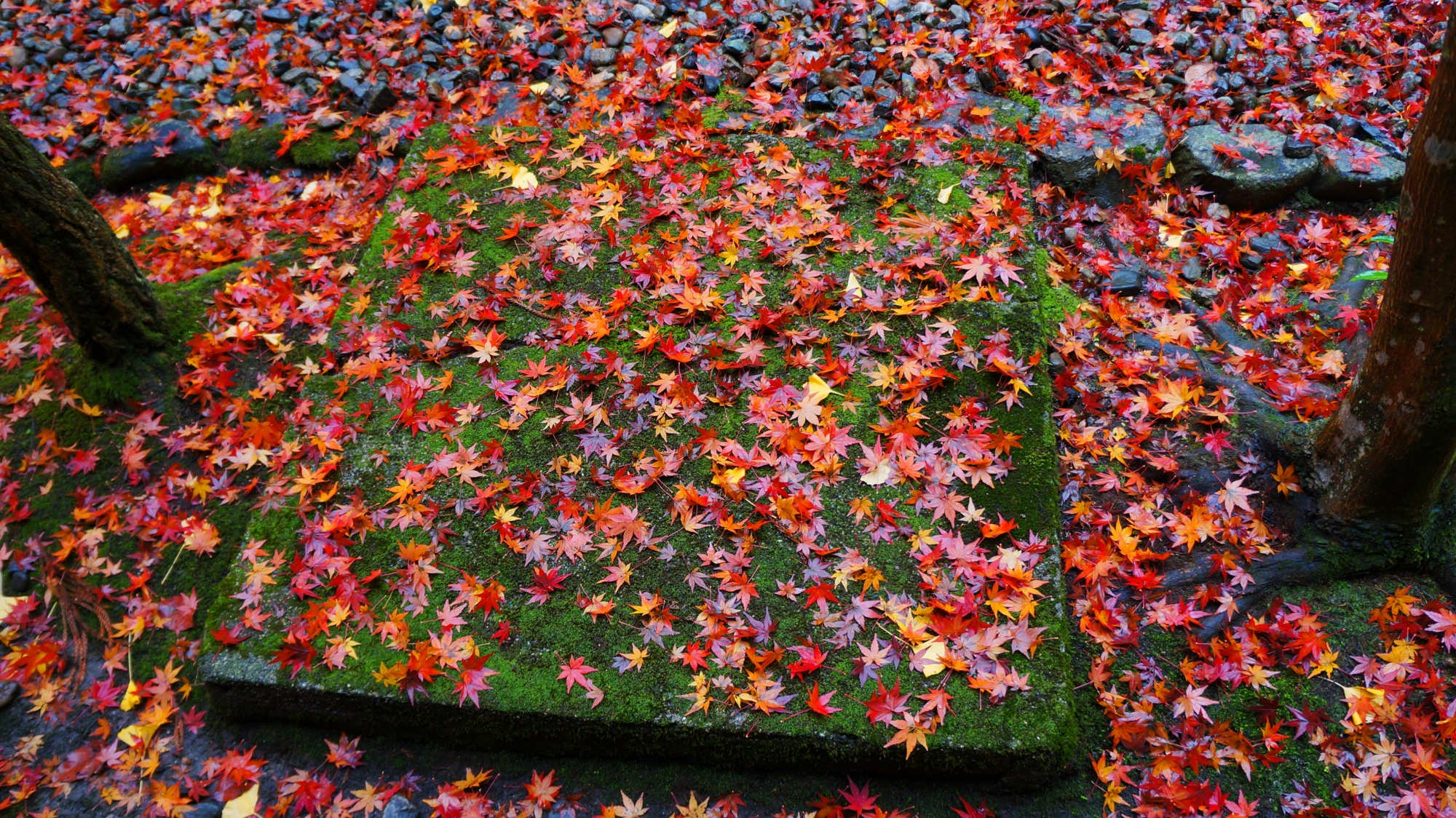 栖賢寺の素晴らしい紅葉と情景