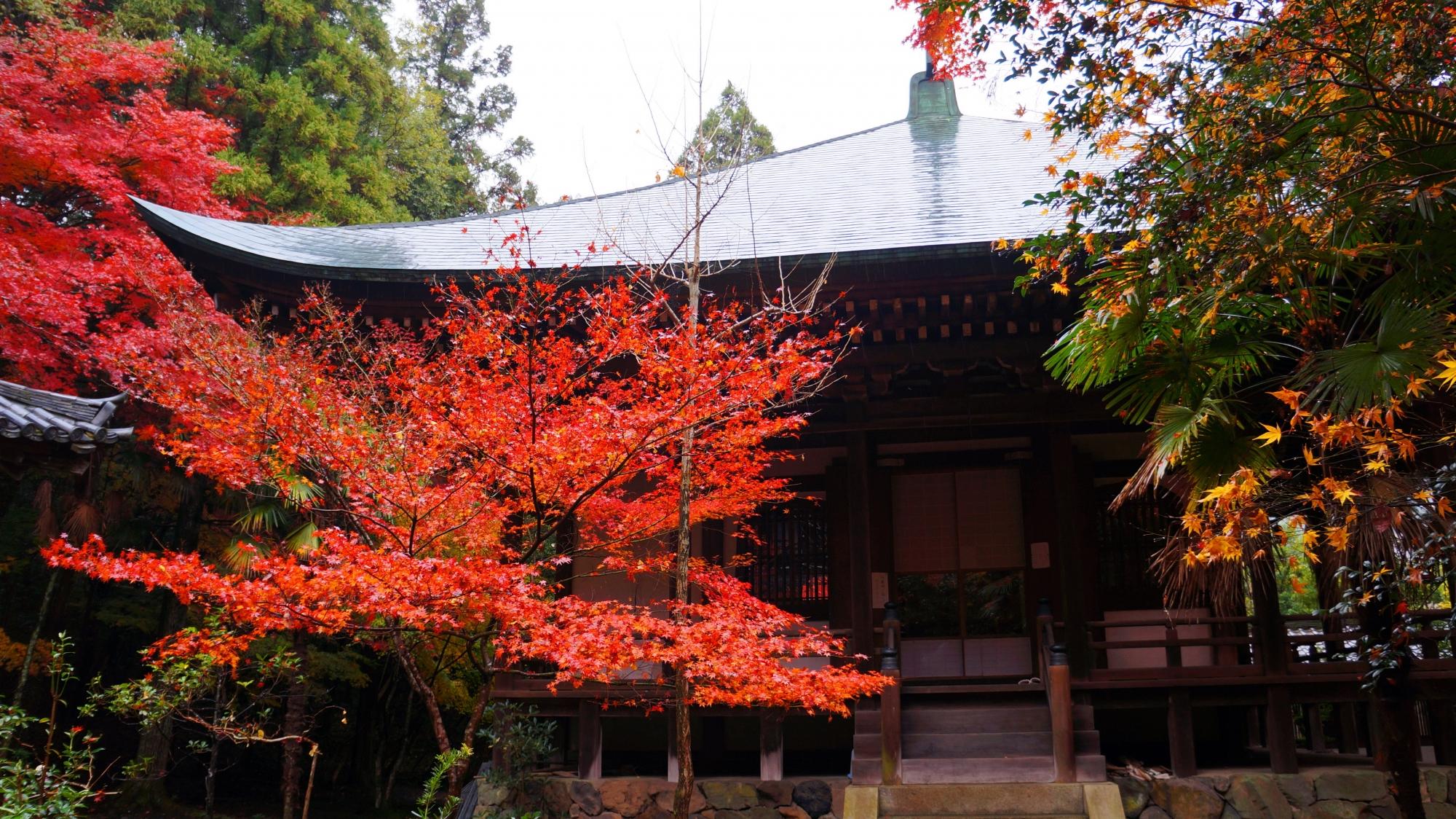 栖賢寺の本堂と紅葉