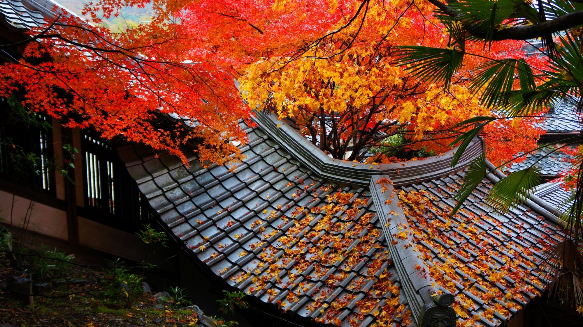 栖賢寺の回廊と紅葉