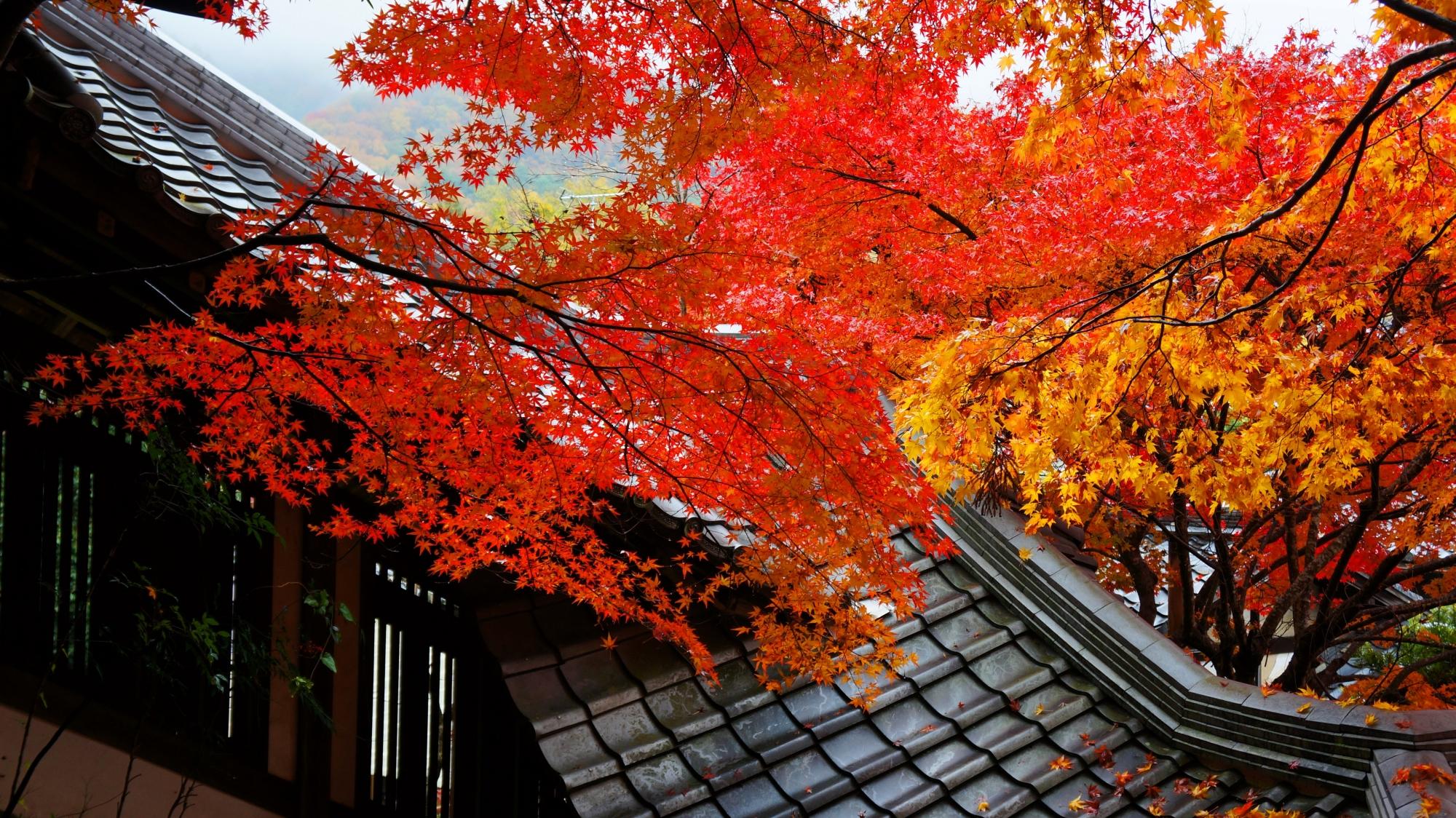 風情ある回廊と鮮やかな紅葉