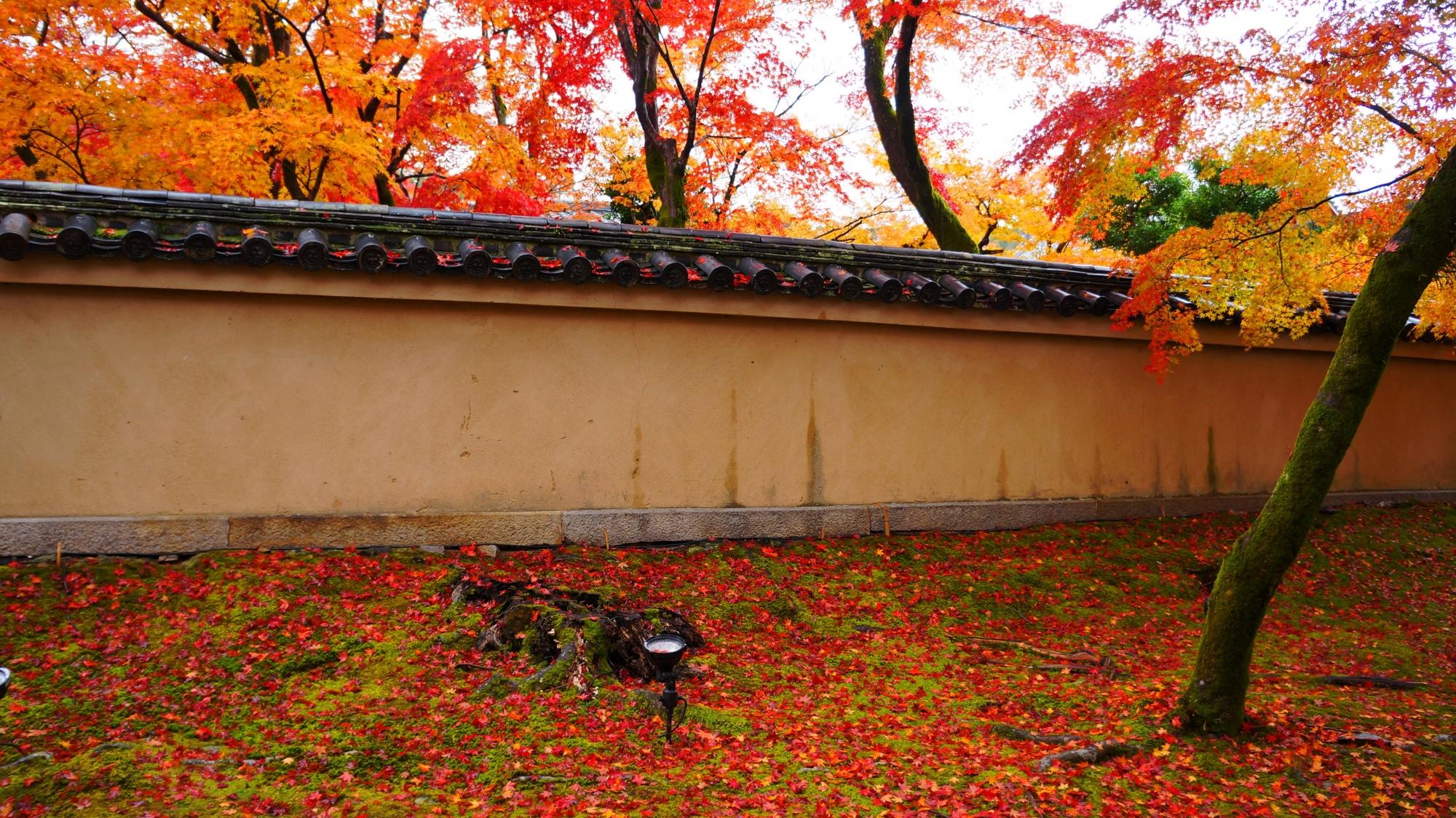 宝厳院の参道の散紅葉