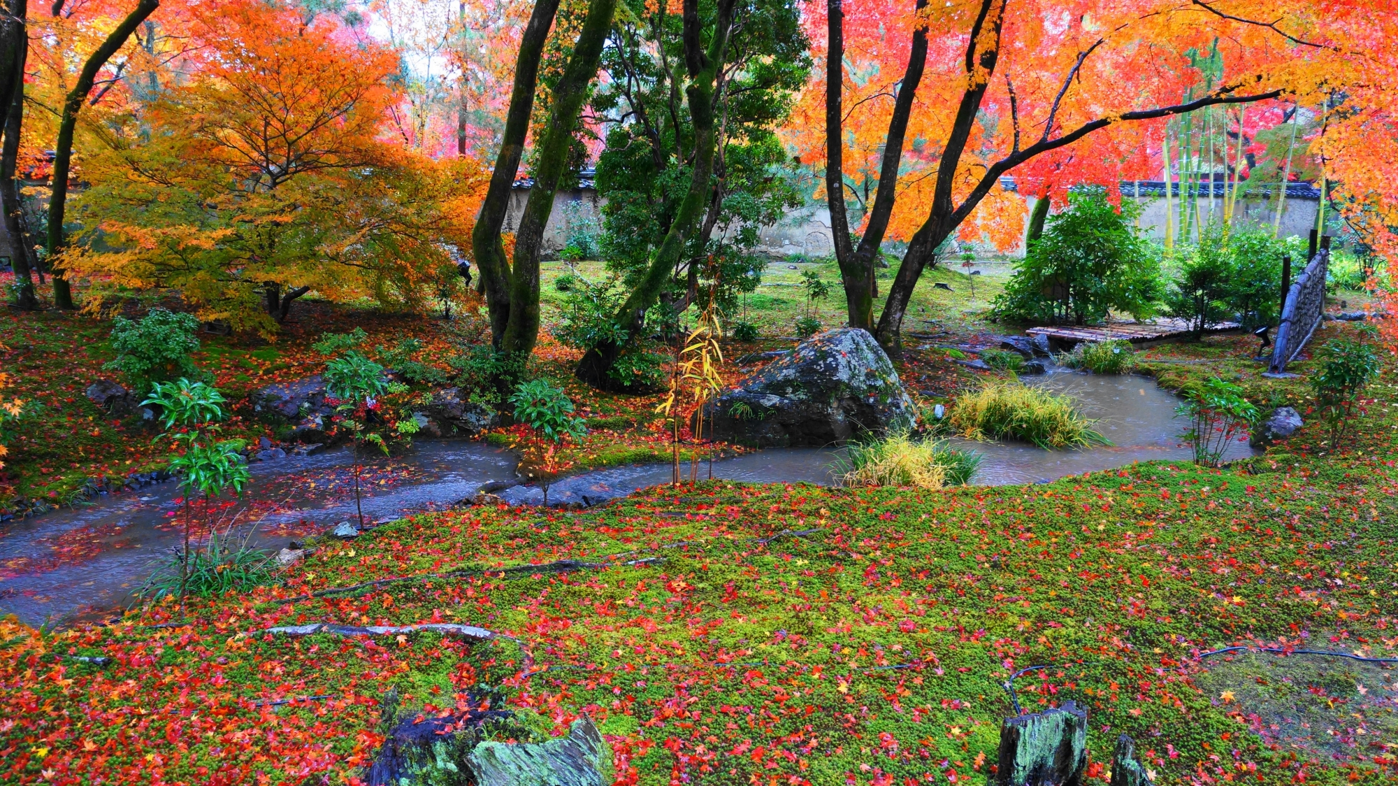 秋色につつまれた宝厳院の獅子吼の庭