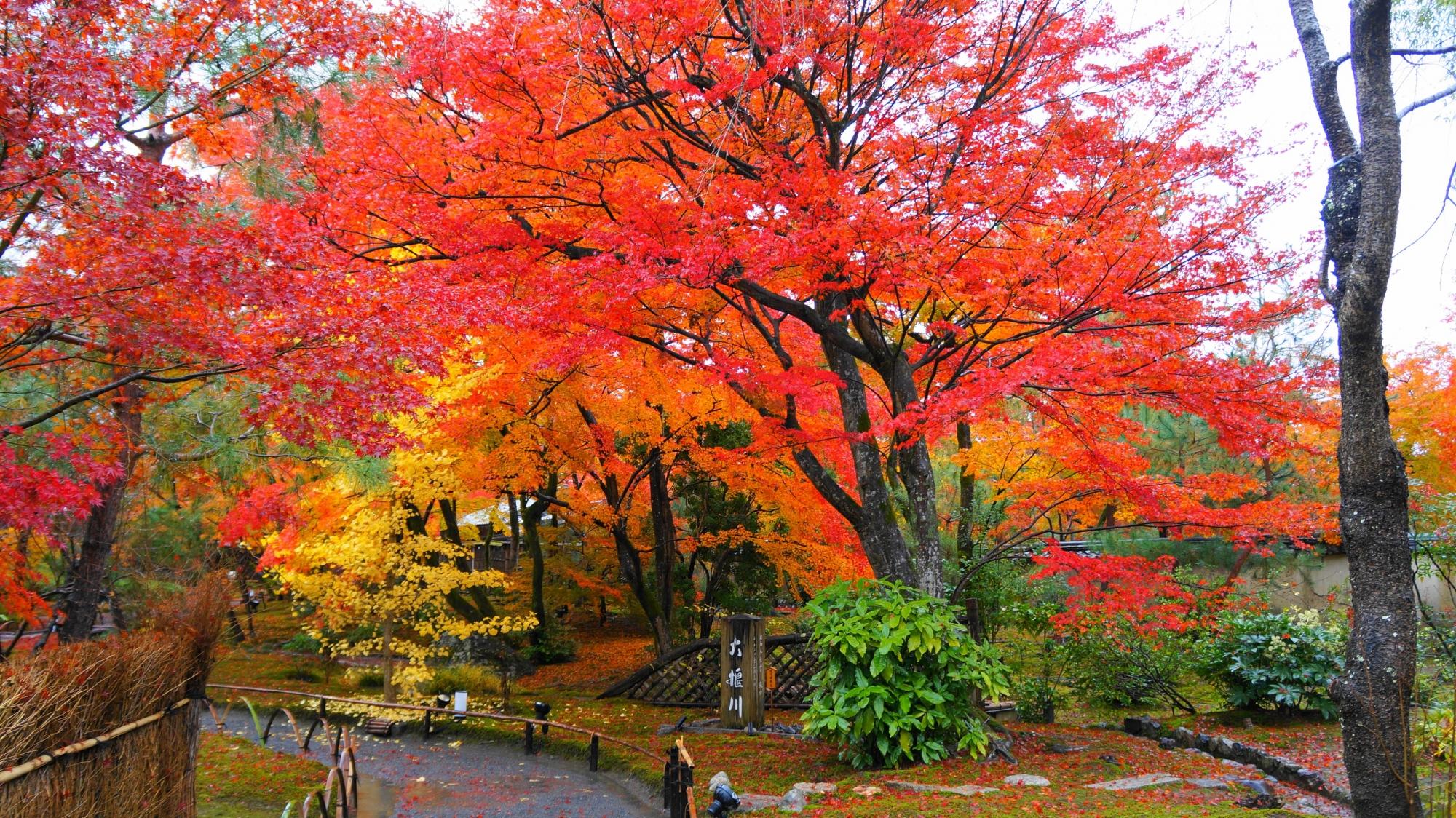 真っ赤な紅葉に覆われた天龍寺塔頭の宝厳院