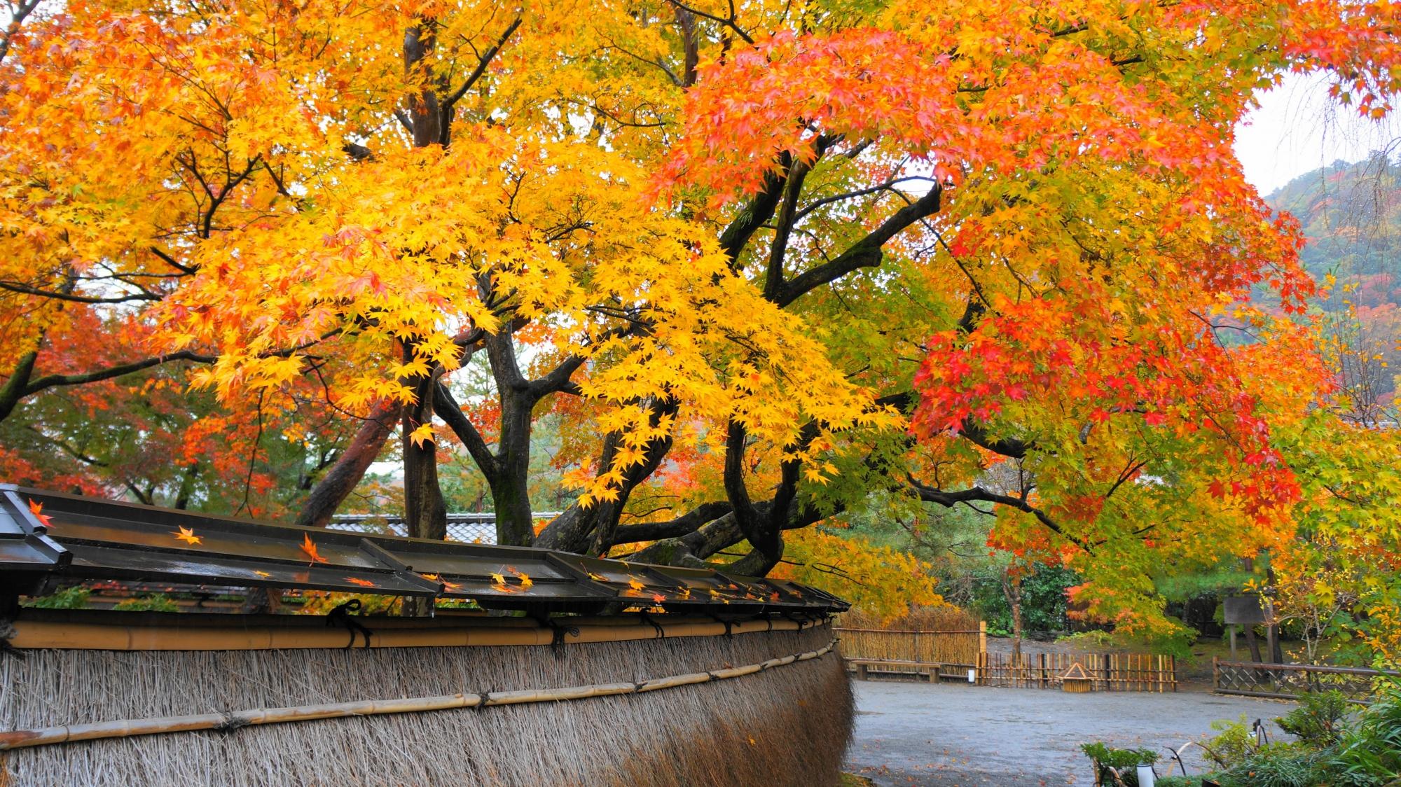 宝厳院の黄色やオレンジ色の紅葉