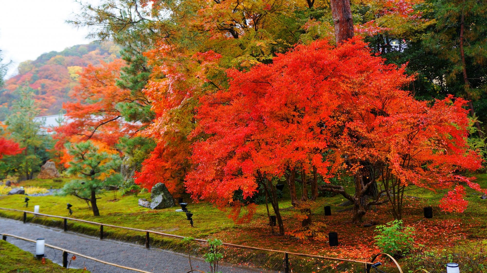 獅子吼の庭の緑の苔の上に赤く散ったドウダンツツジ
