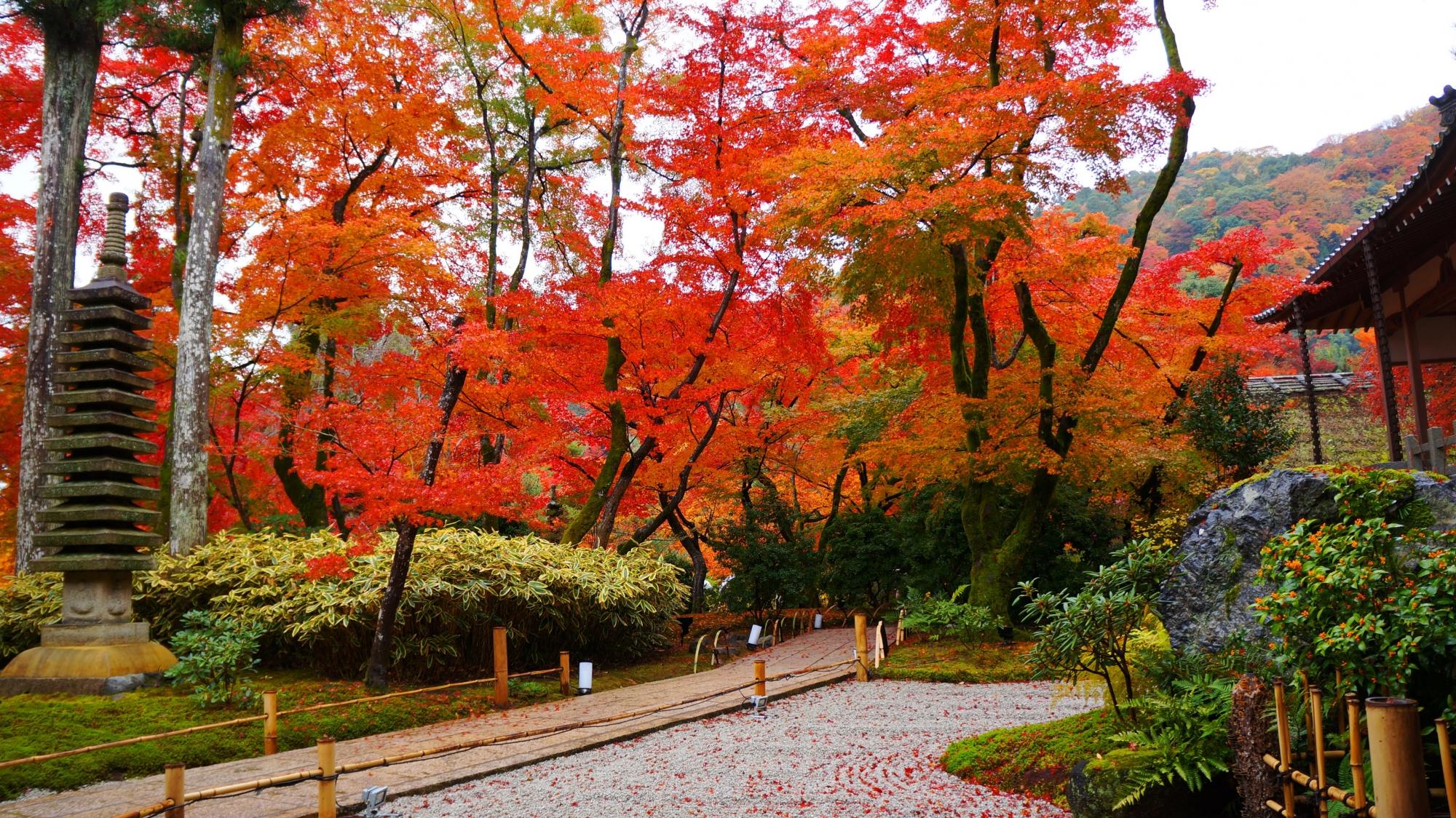 宝厳院の本堂前の紅葉