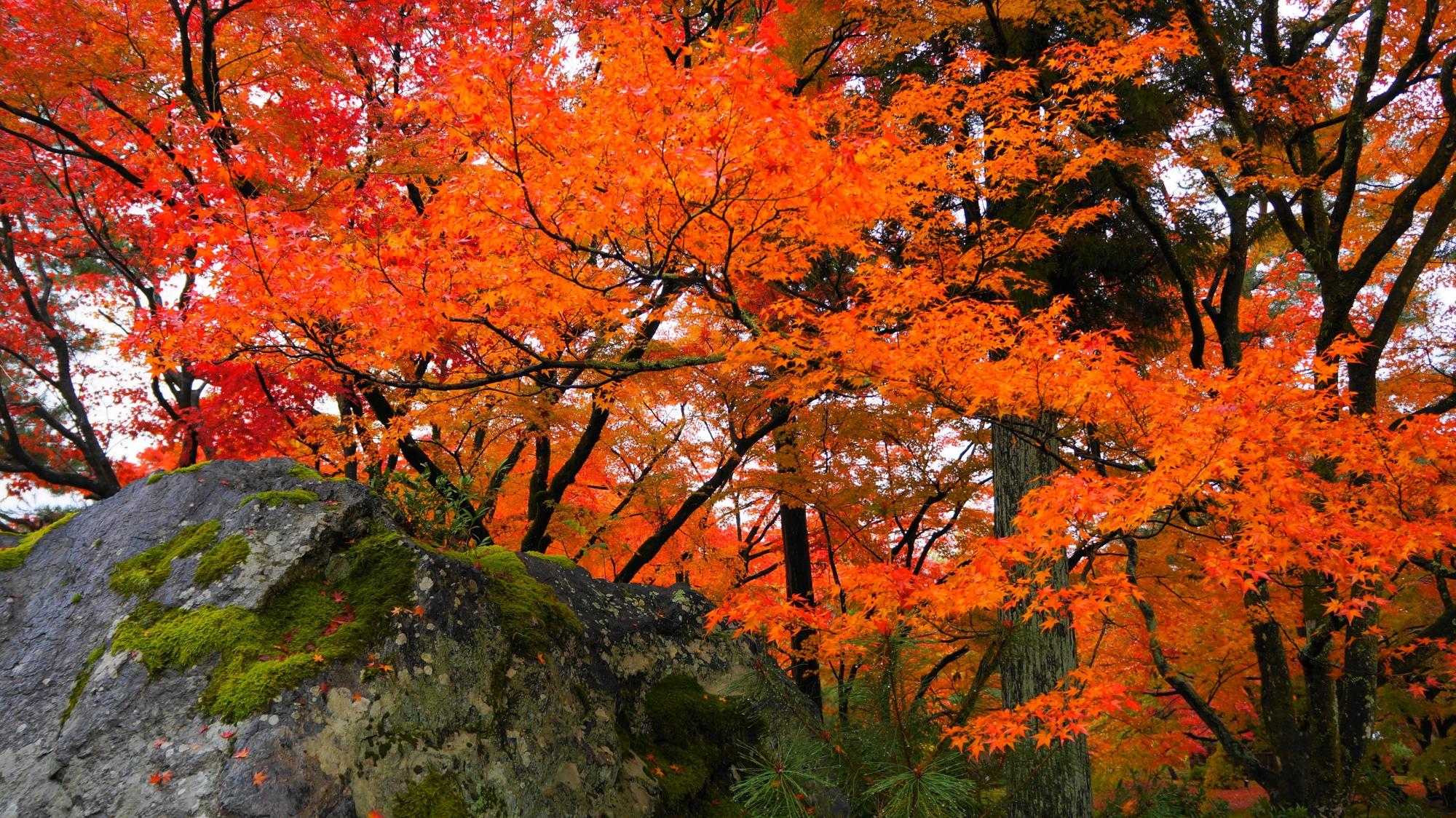 紅葉や苔に覆われた宝厳院の碧岩