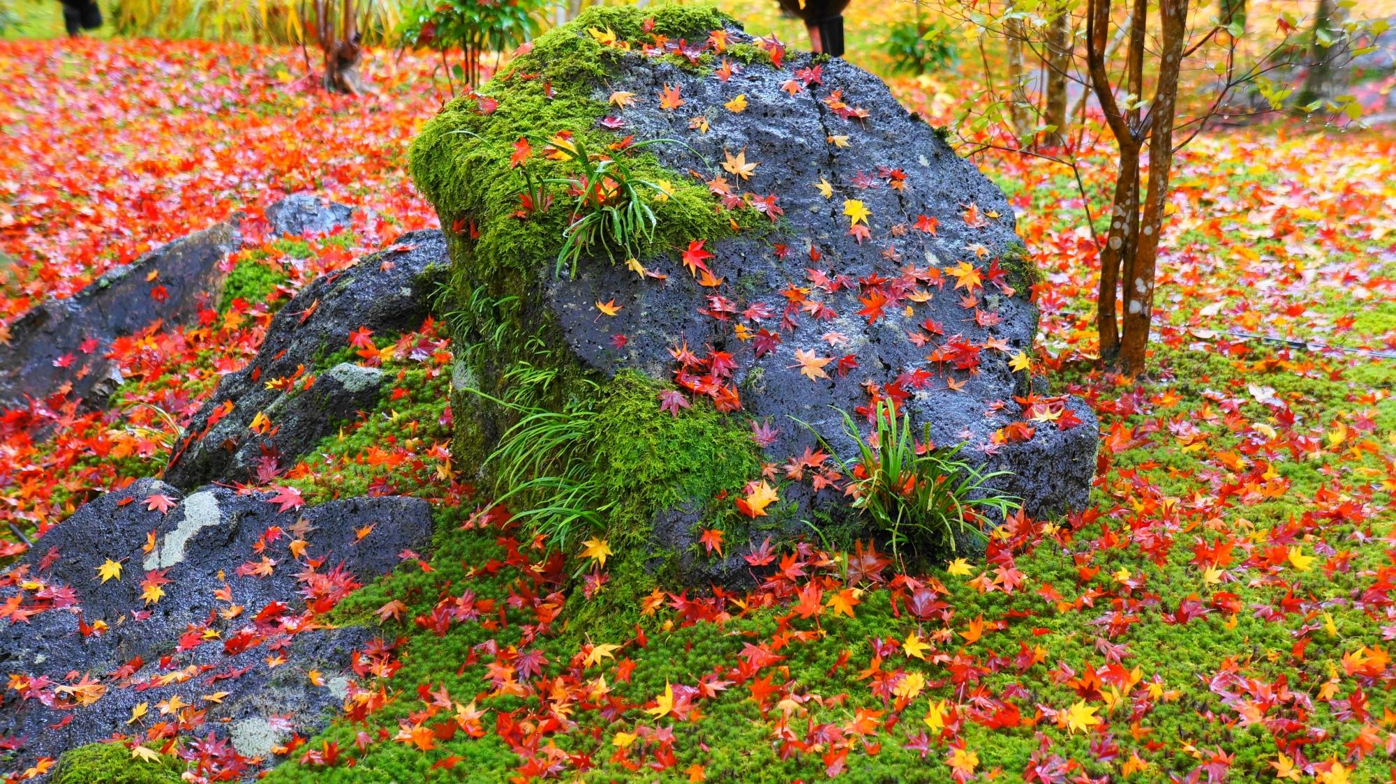 宝厳院の華やかに散った紅葉