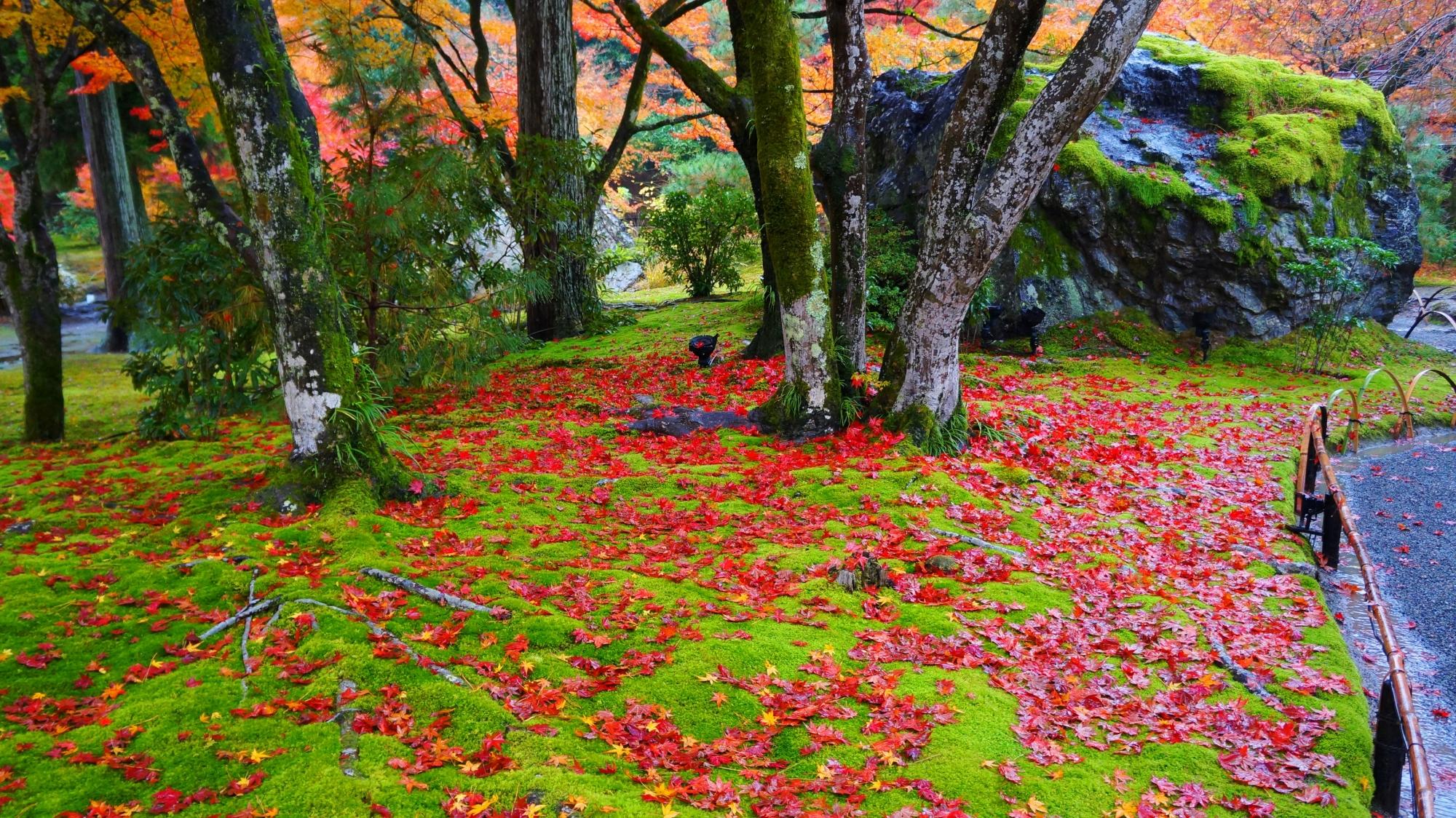 宝厳院の見事な敷き紅葉