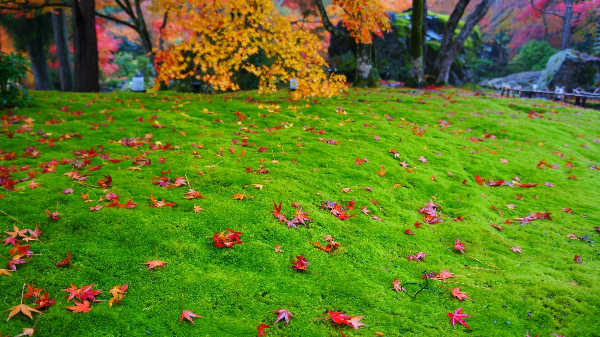 見所満載の紅葉の獅子吼の庭