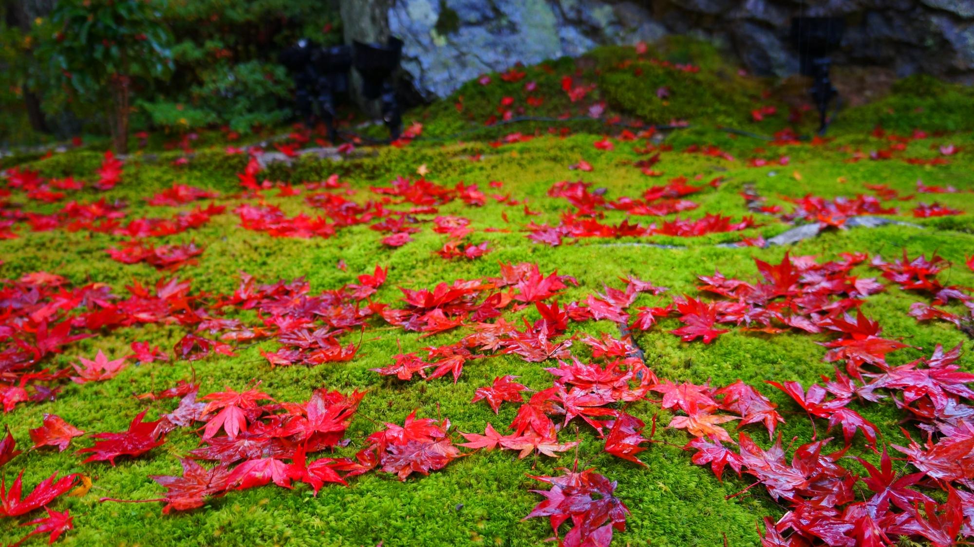 紅葉の真髄は「散り」