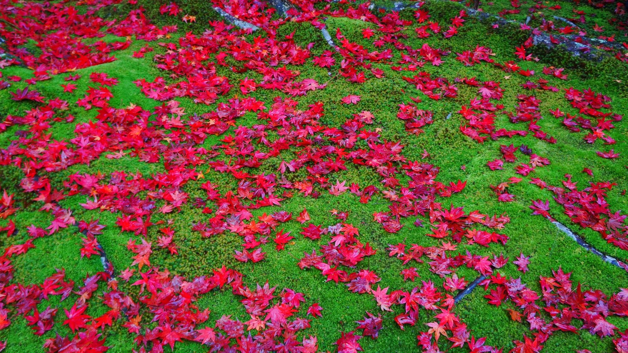 宝厳院の綺麗な散紅葉