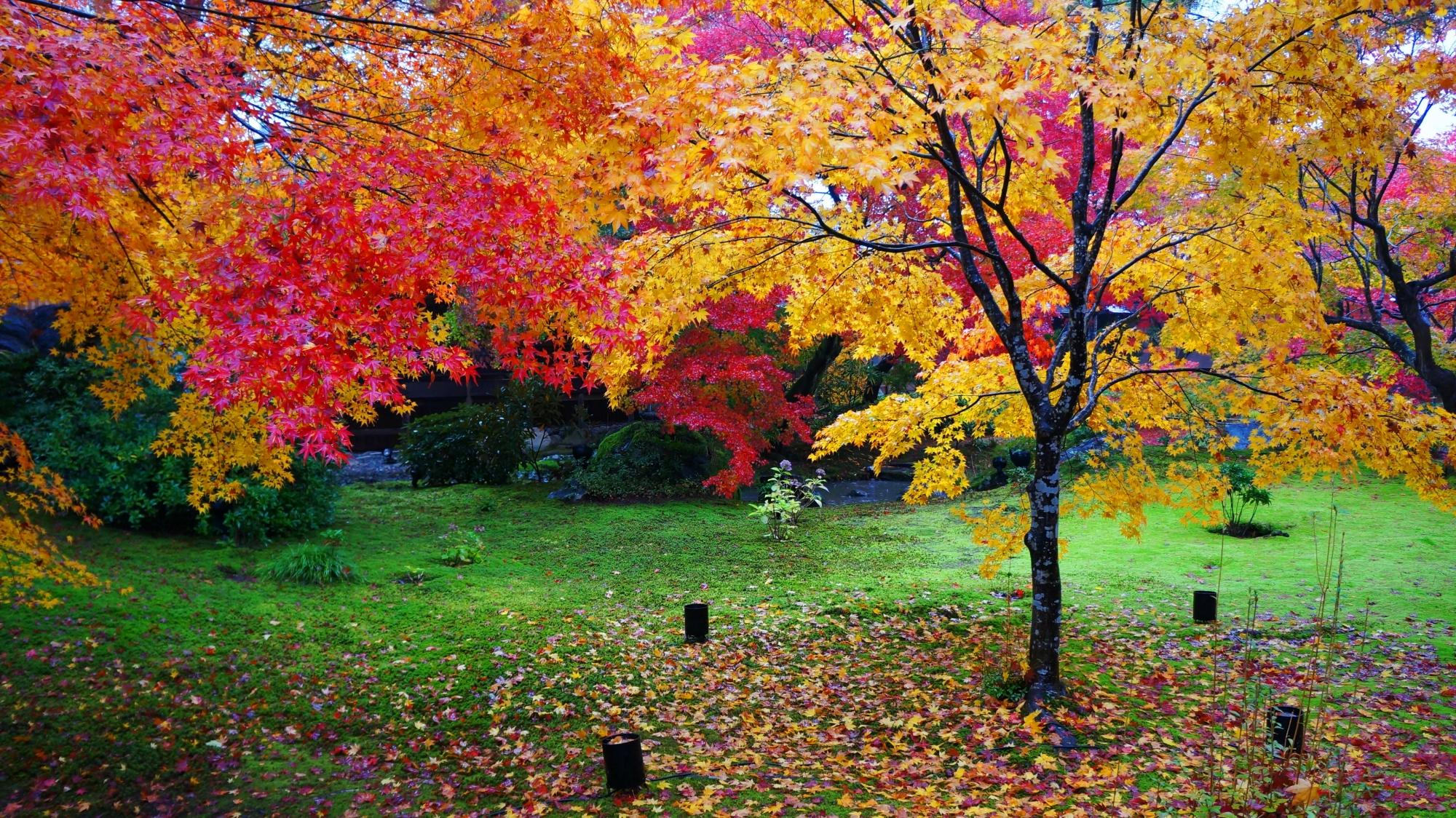 赤や黄色やオレンジの紅葉が入り混じる宝厳院
