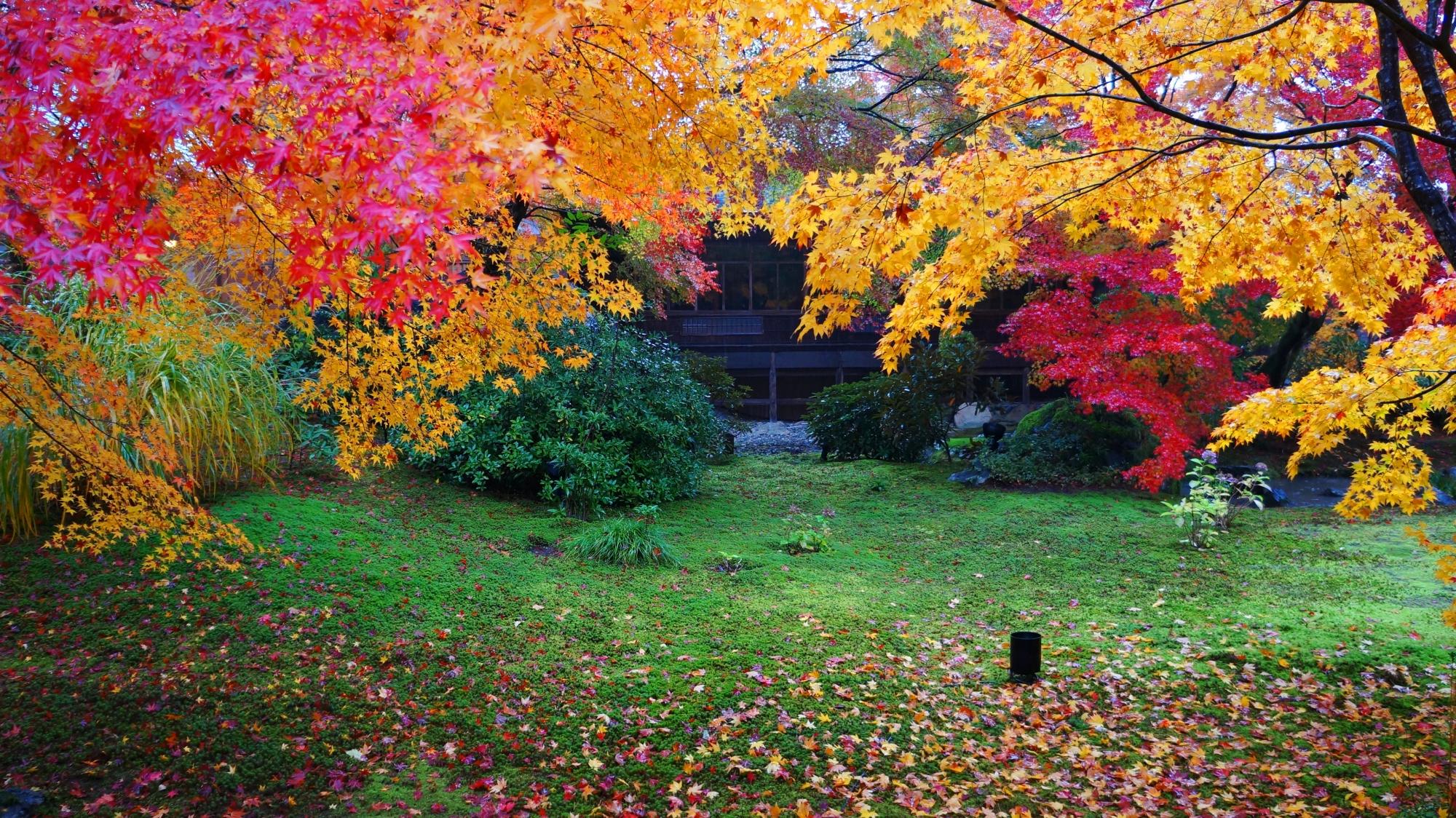 色とりどりの紅葉がふりそそぐ獅子吼の庭