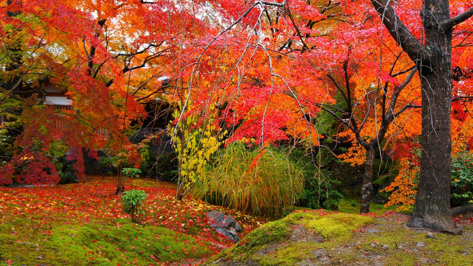 いろんな植物が入り乱れて秋を彩る宝厳院
