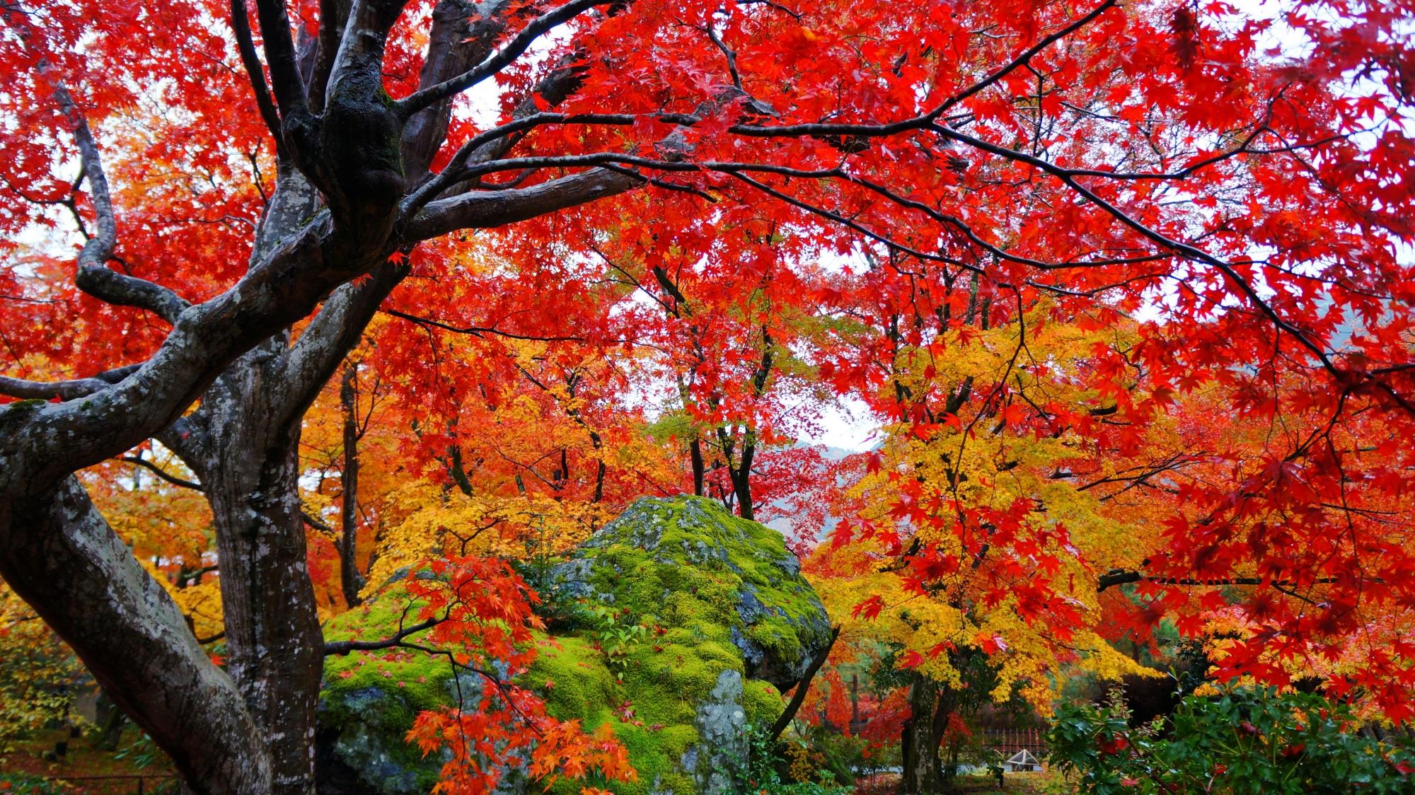 真っ赤な紅葉に覆われた獅子岩