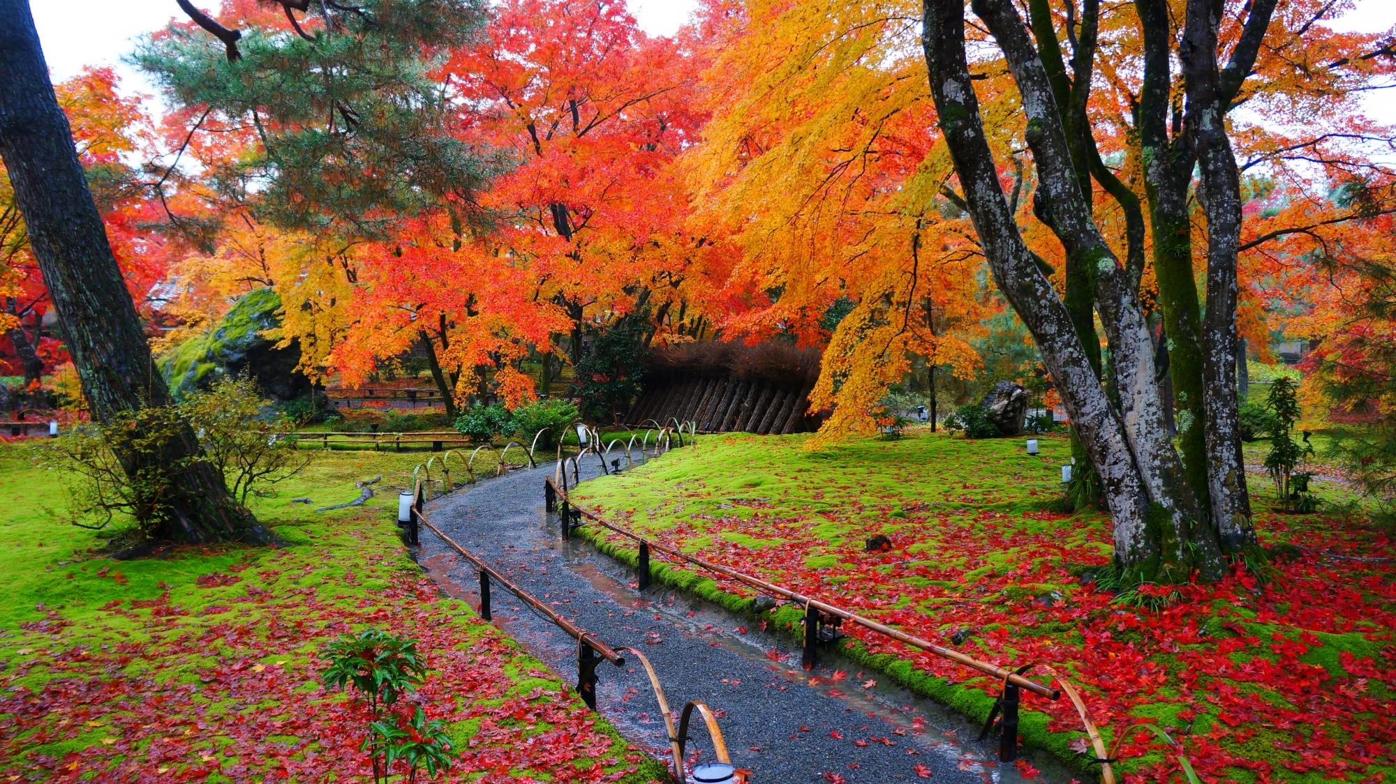 一生もんの宝厳院の凄い紅葉