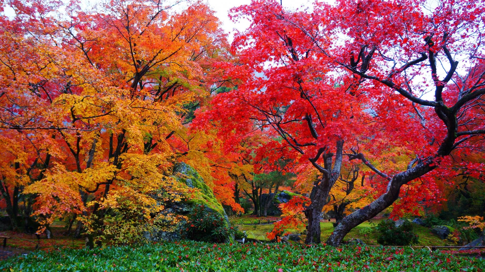 赤と黄色の紅葉の美しい宝厳院