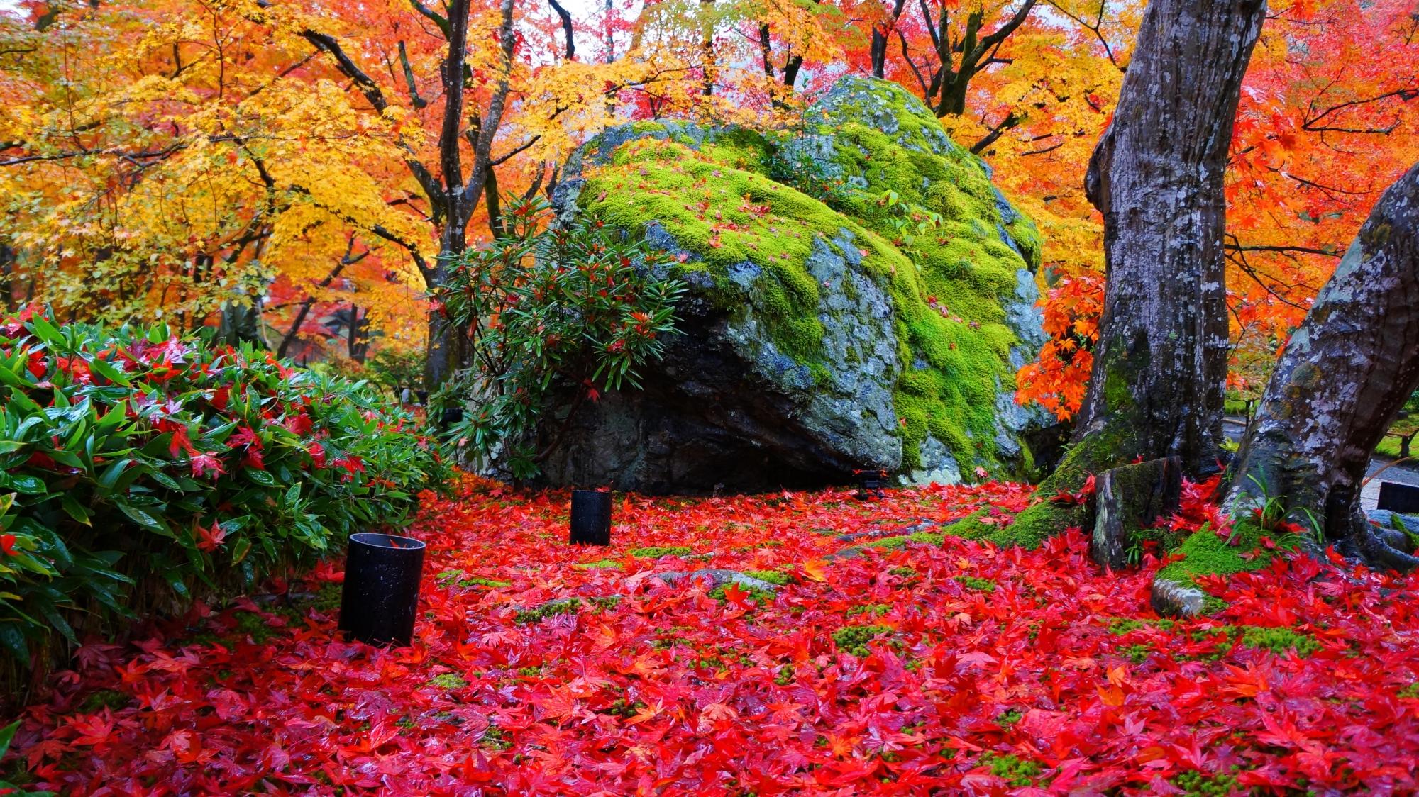 宝厳院のレッドカーペットを進むライオン(獅子岩)