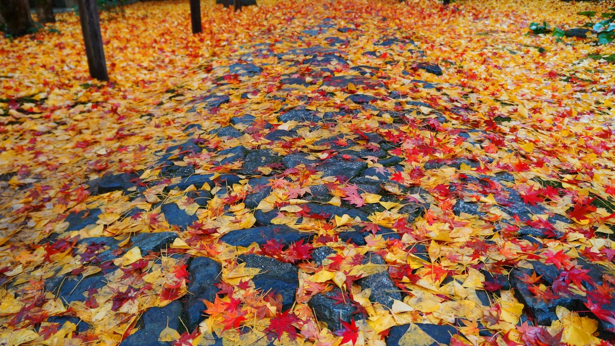 蓮華寺の雨に濡れた黄色い散り銀杏と赤い散り紅葉