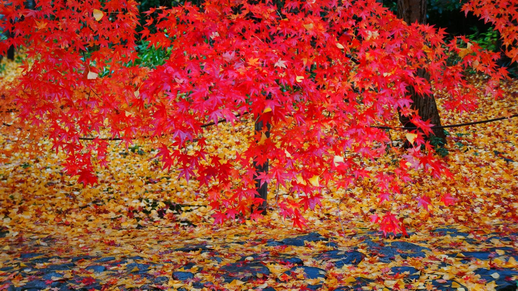 蓮華寺の華やかな赤い紅葉