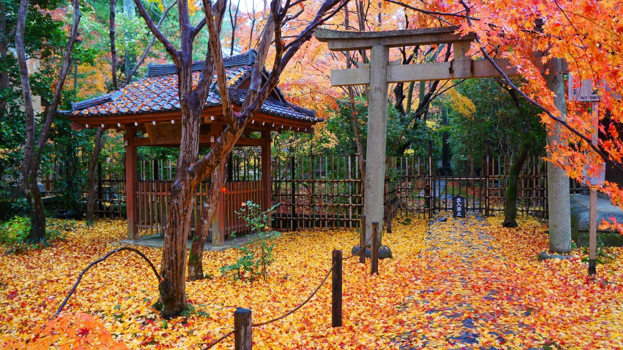 蓮華寺の井戸屋形と散銀杏の黄色い絨毯