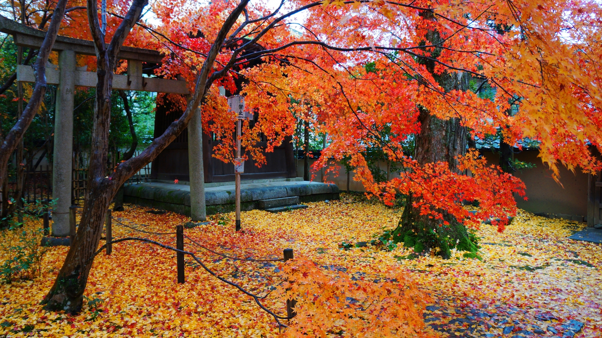 蓮華寺の鐘楼の紅葉