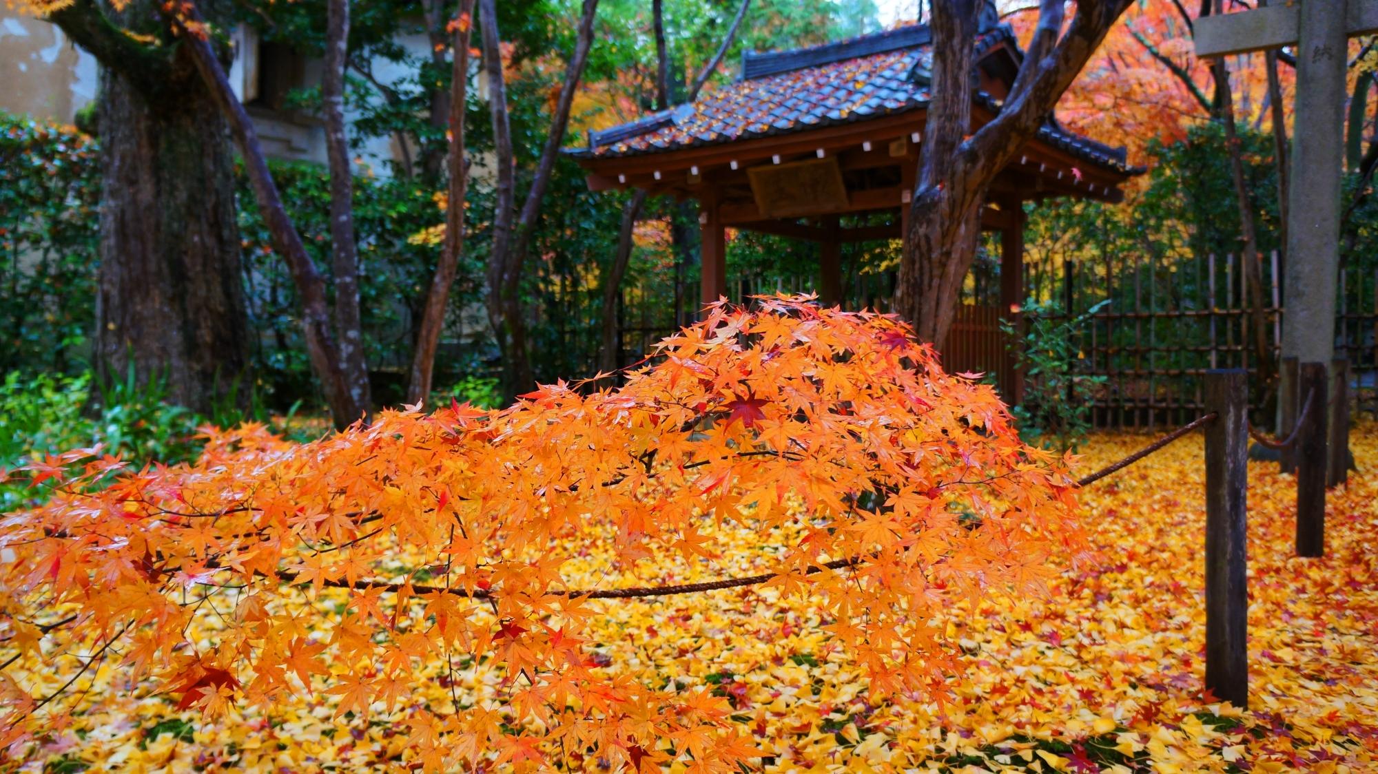 蓮華寺のオレンジ色の紅葉