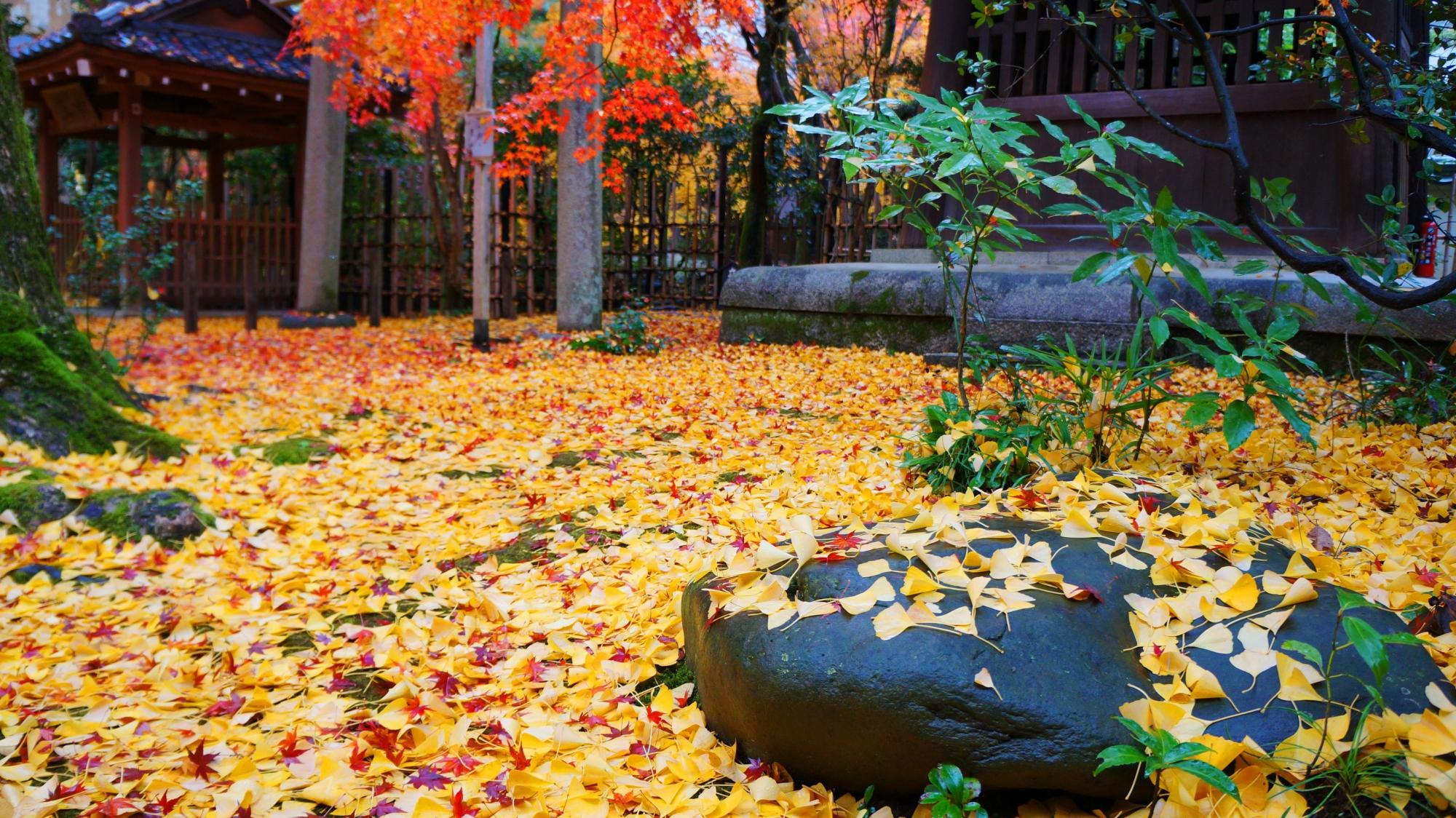 蓮華寺の苔を覆う黄色い散った銀杏の葉