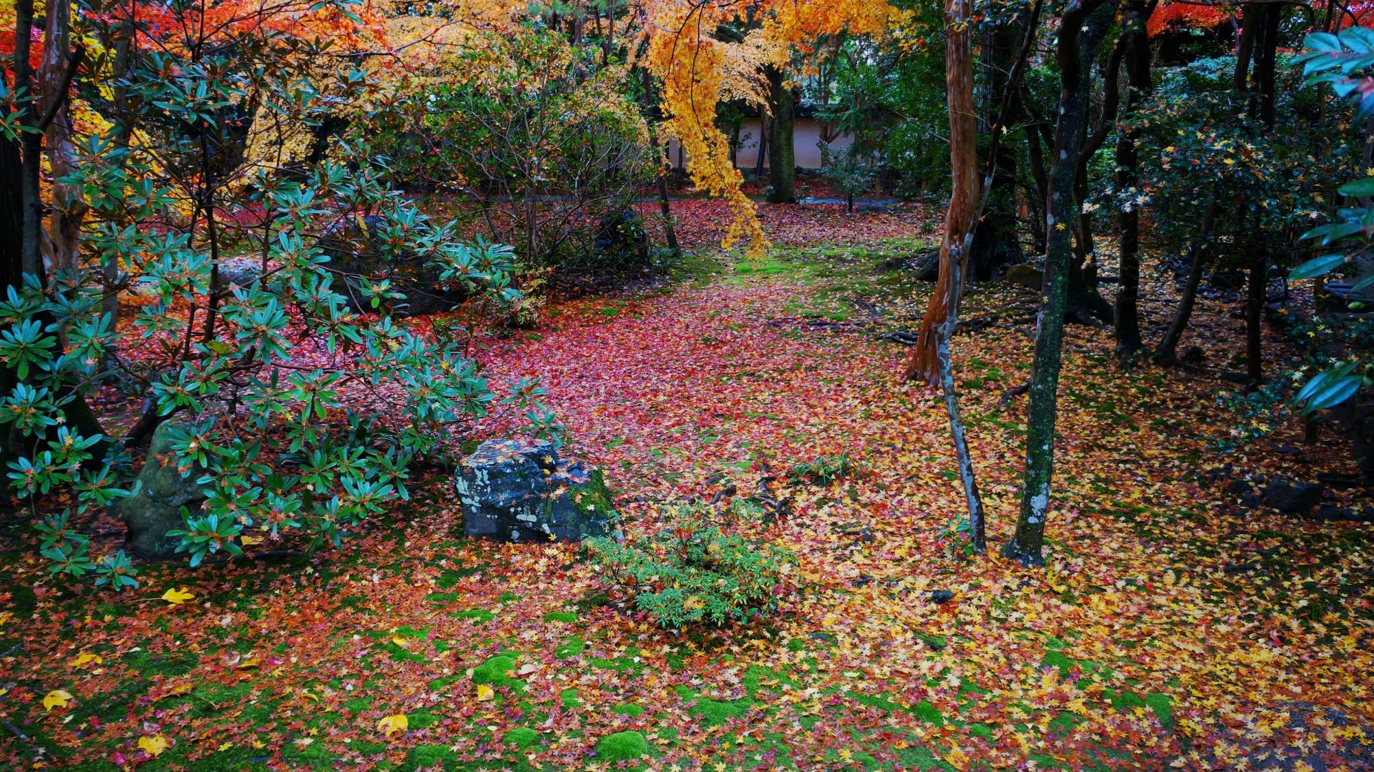 蓮華寺の秋色の優しい空間