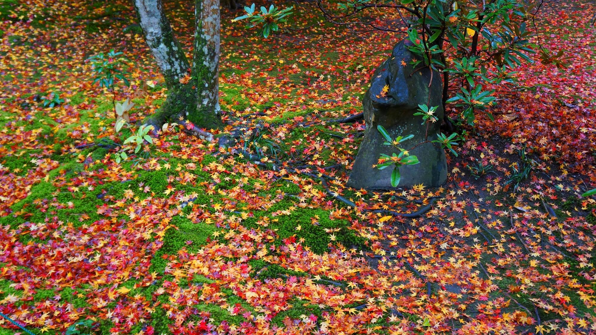 緑の苔に映える赤や黄色の散紅葉