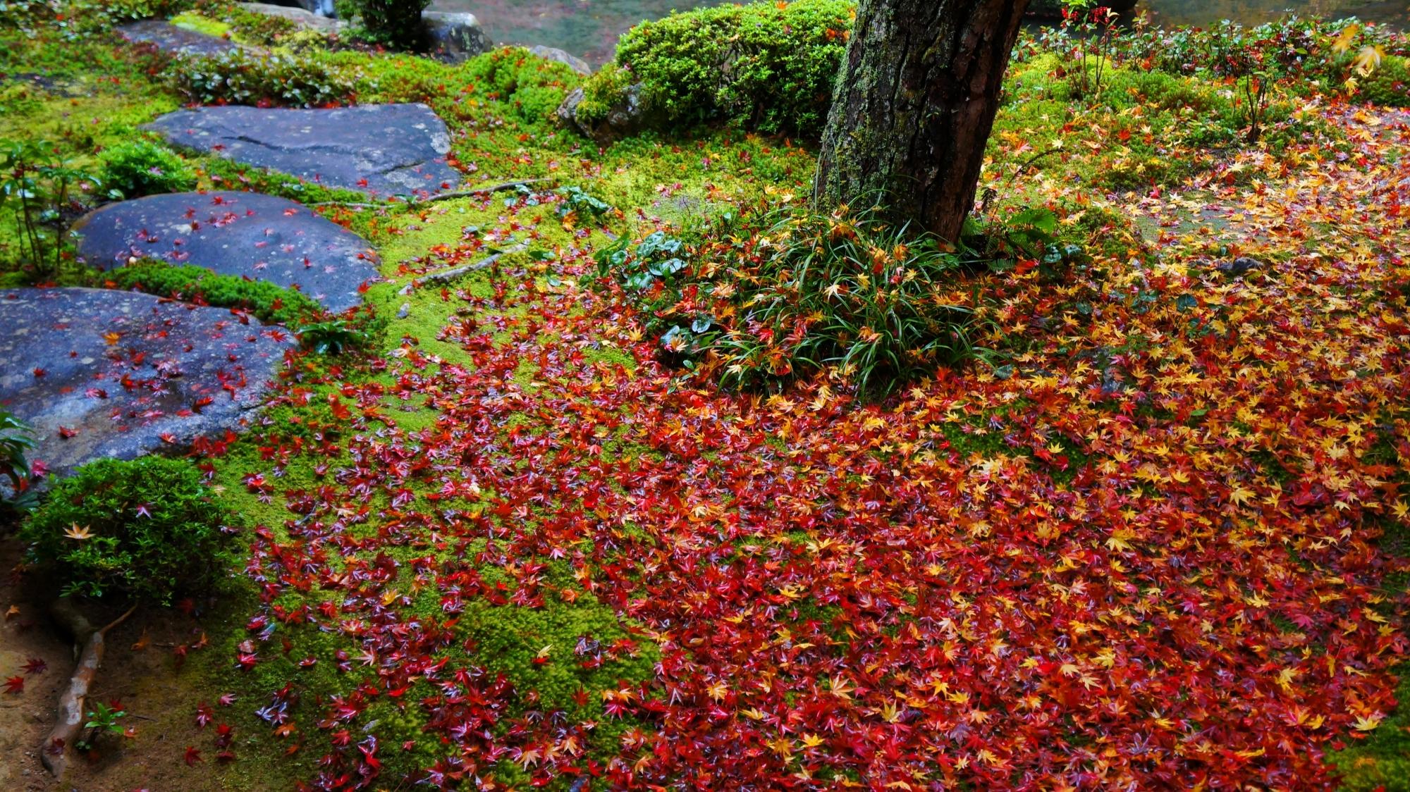 蓮華寺鮮やかな赤い散り紅葉