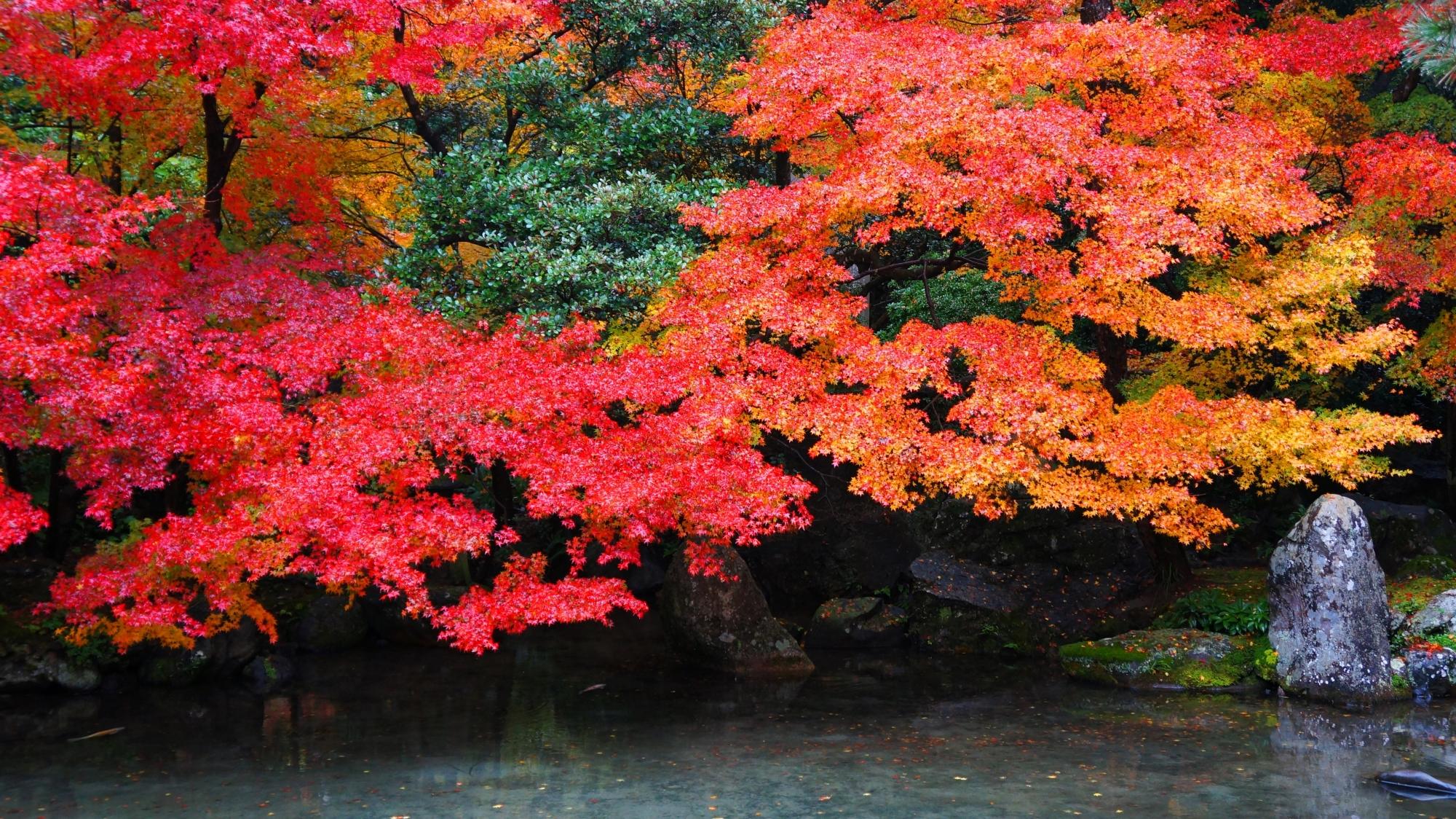 蓮華寺の静寂の中の迫力の紅葉