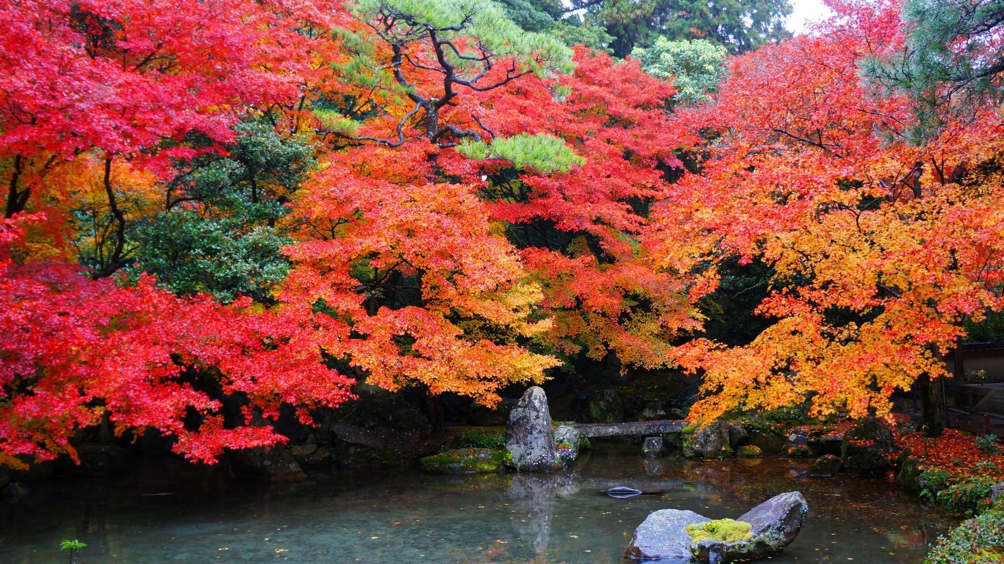 蓮華寺の池泉式庭園の紅葉